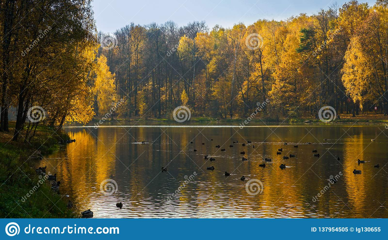 Skogen förlorar dess gröna färg som ändrar det för att gulna, rött och orange