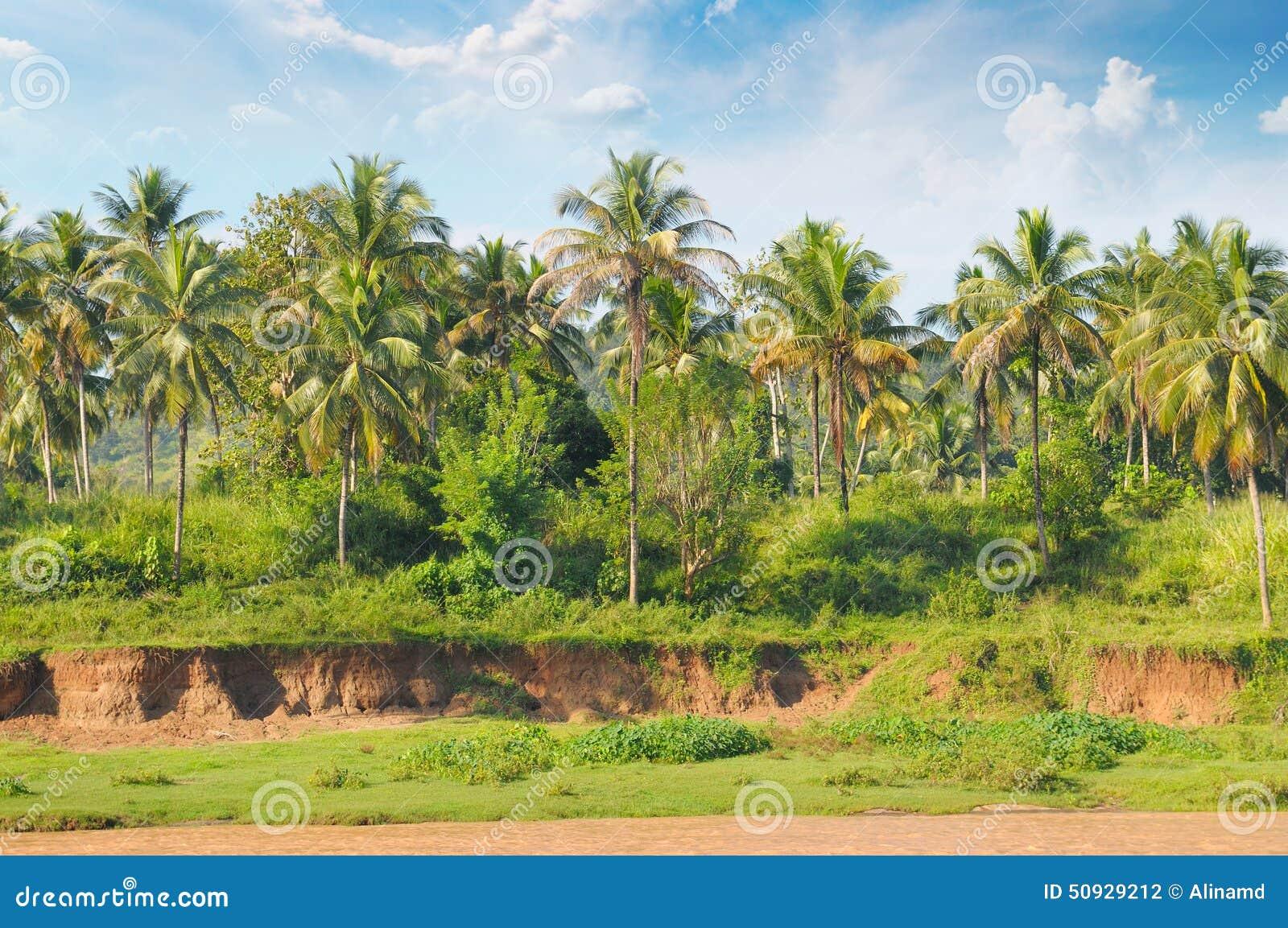 Skogen gömma i handflatan tropiskt