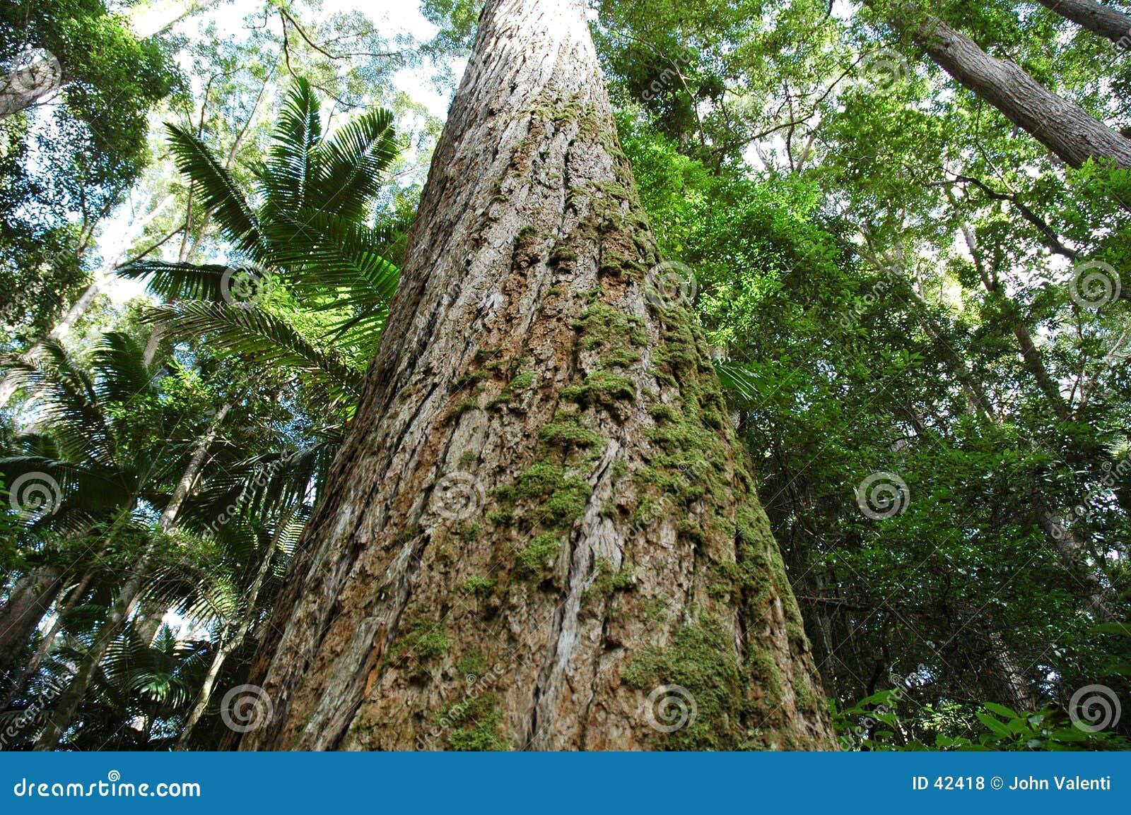 Skogen sörjer