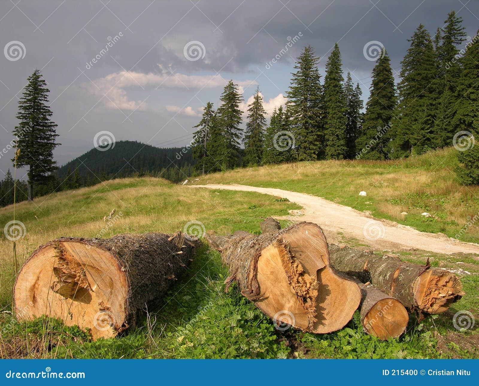 Skogen sparar