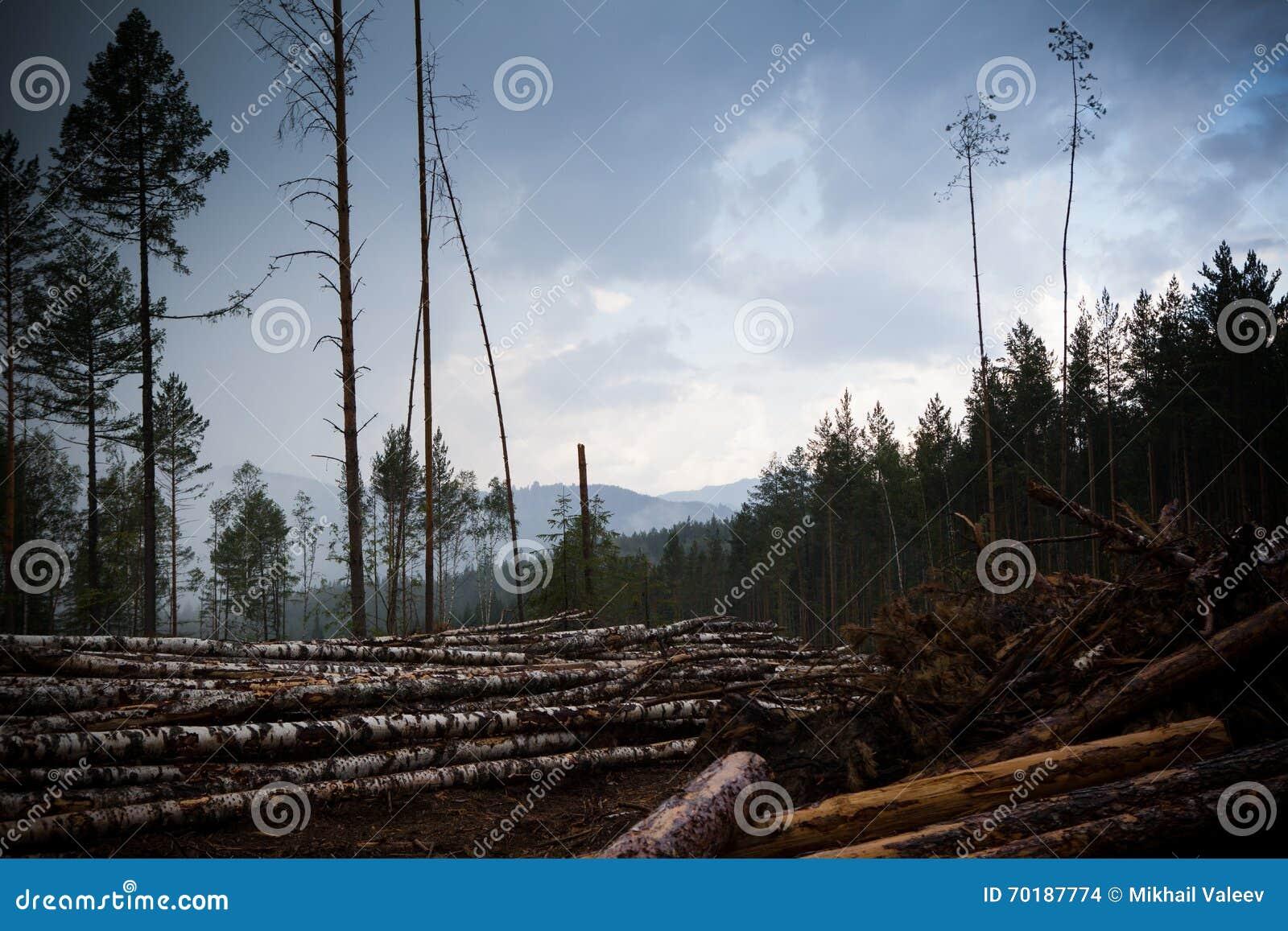 Skogförstörelseområde