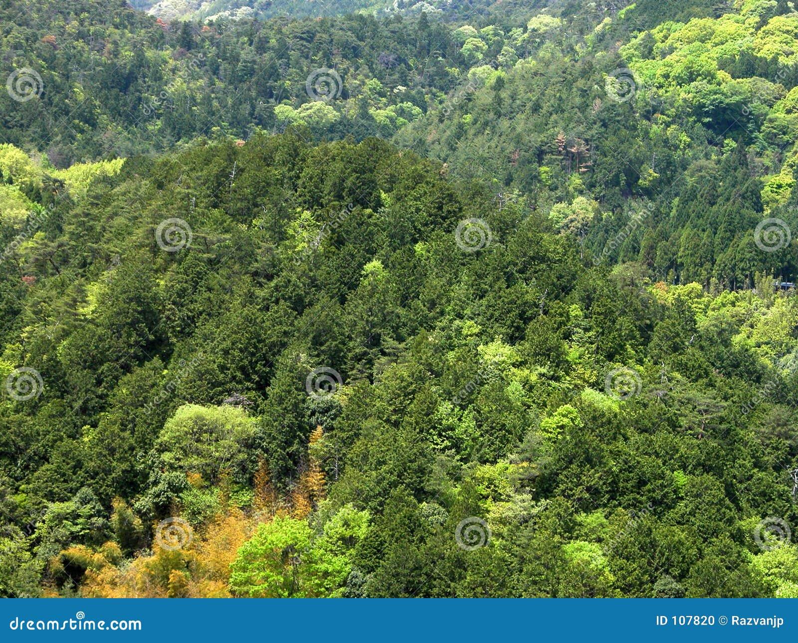 Skoggreen