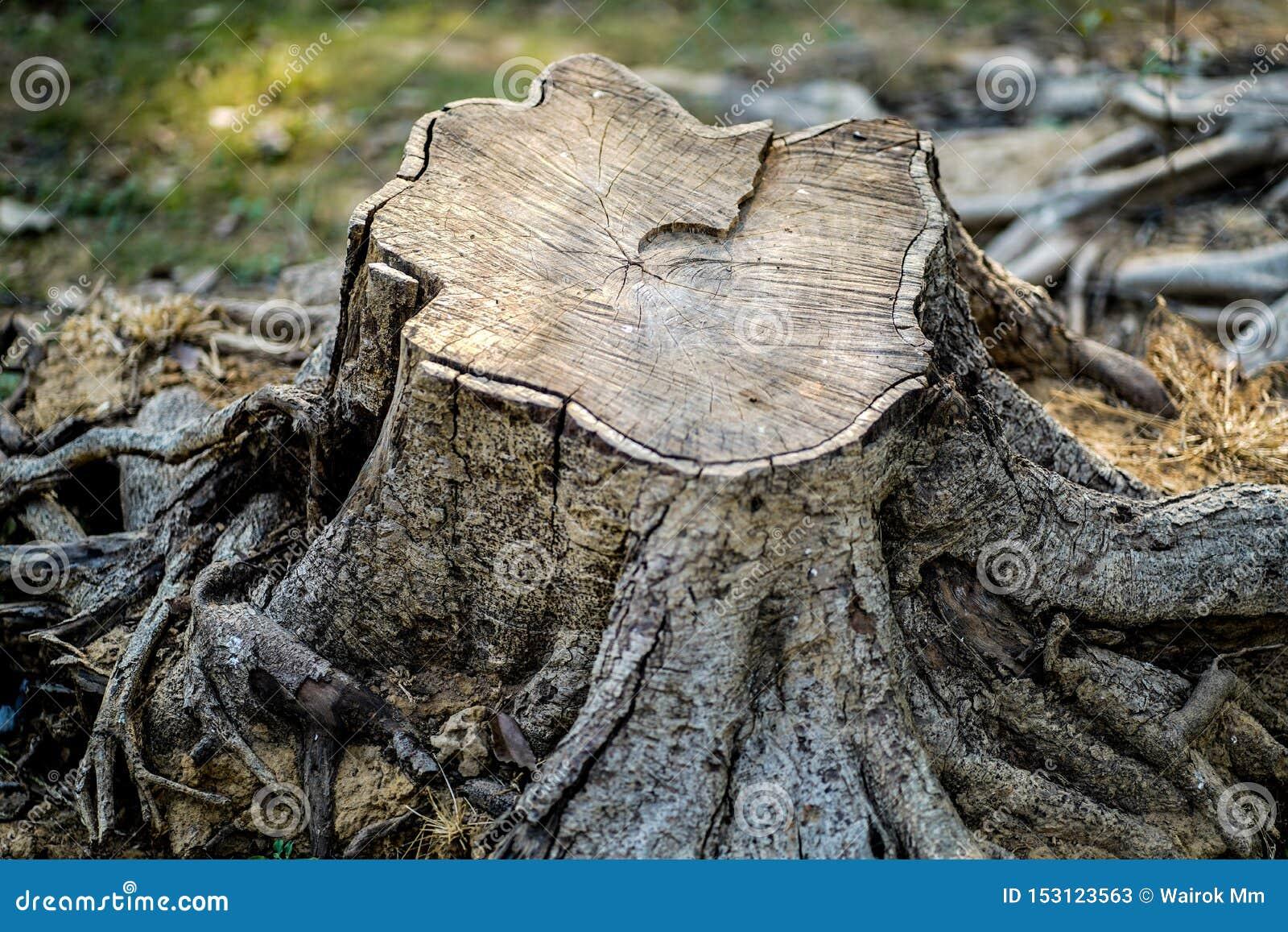 Skogsavverkning - räddninglock, så att vår nästa generation kan få luft för fritt