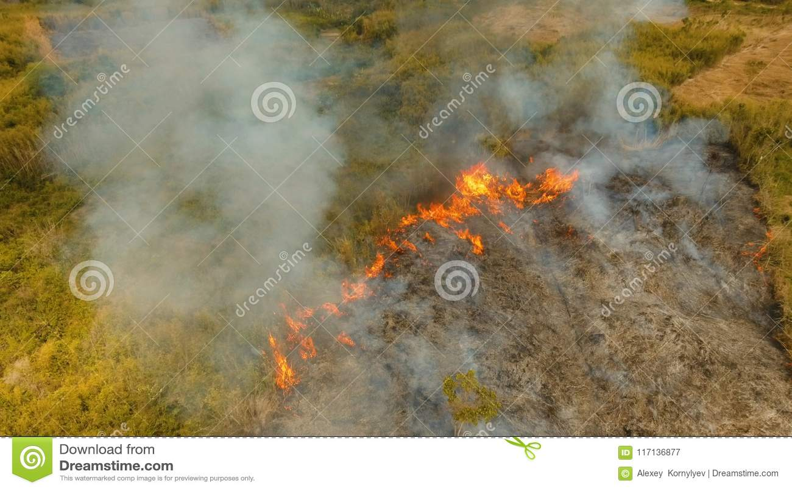 Skogsbrand för flyg- sikt Busuanga Palawan, Filippinerna