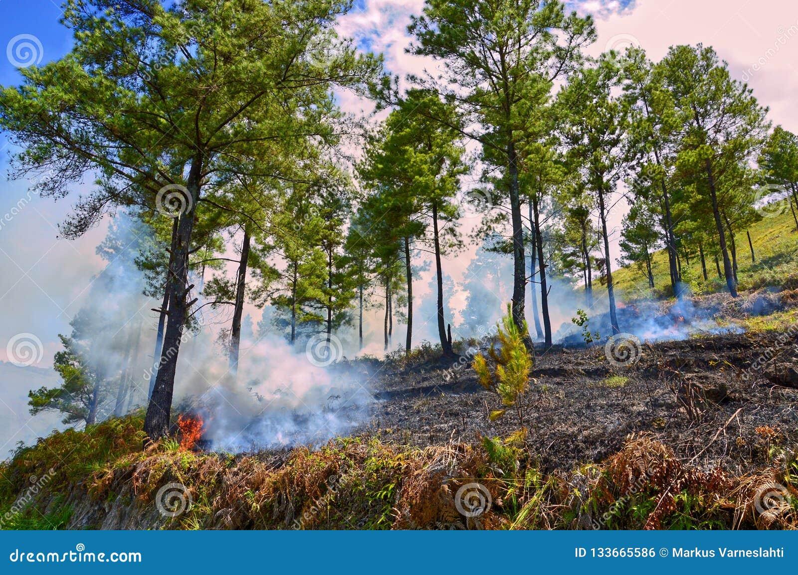 Skogsbrand i sjön Toba, Indonesien