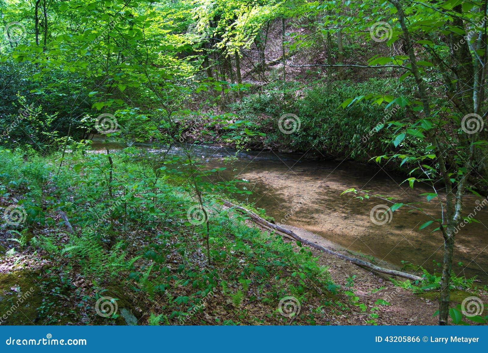 Download Skogsmarkslinga Vid En Liten Vik På Den Blåa Ridge Parkway, Virginia, USA Arkivfoto - Bild av natur, bana: 43205866