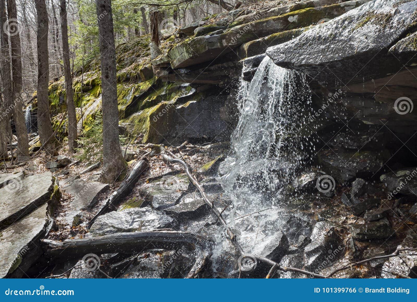 Skogsmarkvattenfall i de Catskill bergen
