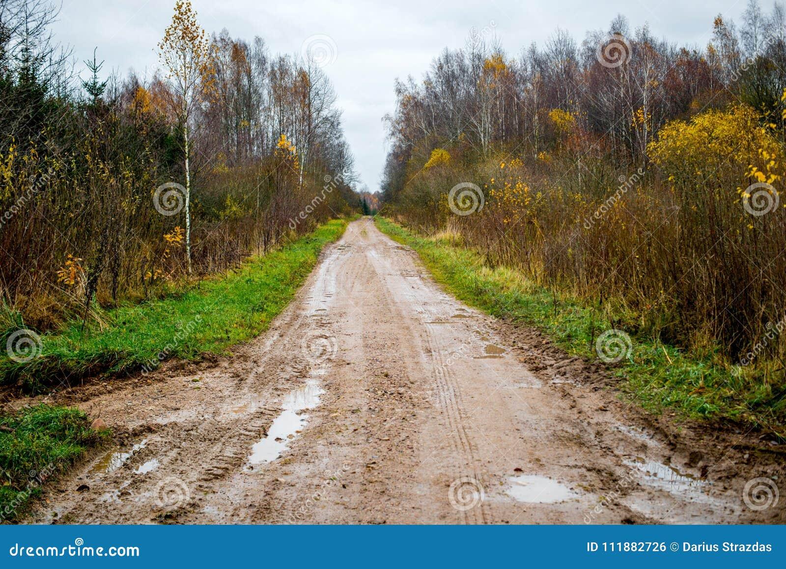 Skogväg i sen nedgång
