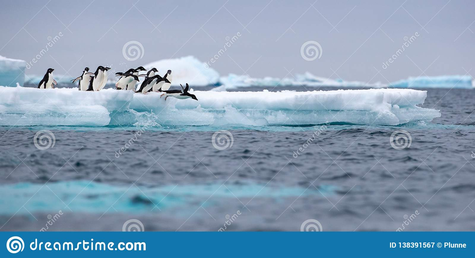 Skokowy pingwin X28 & Adelie; Adélie& x29; pingwin nurkuje w morze od góry lodowej