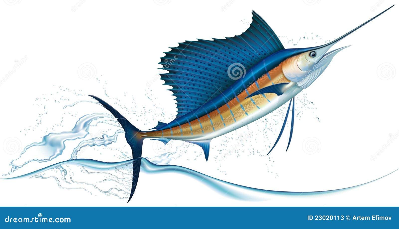 Skokowy sailfish