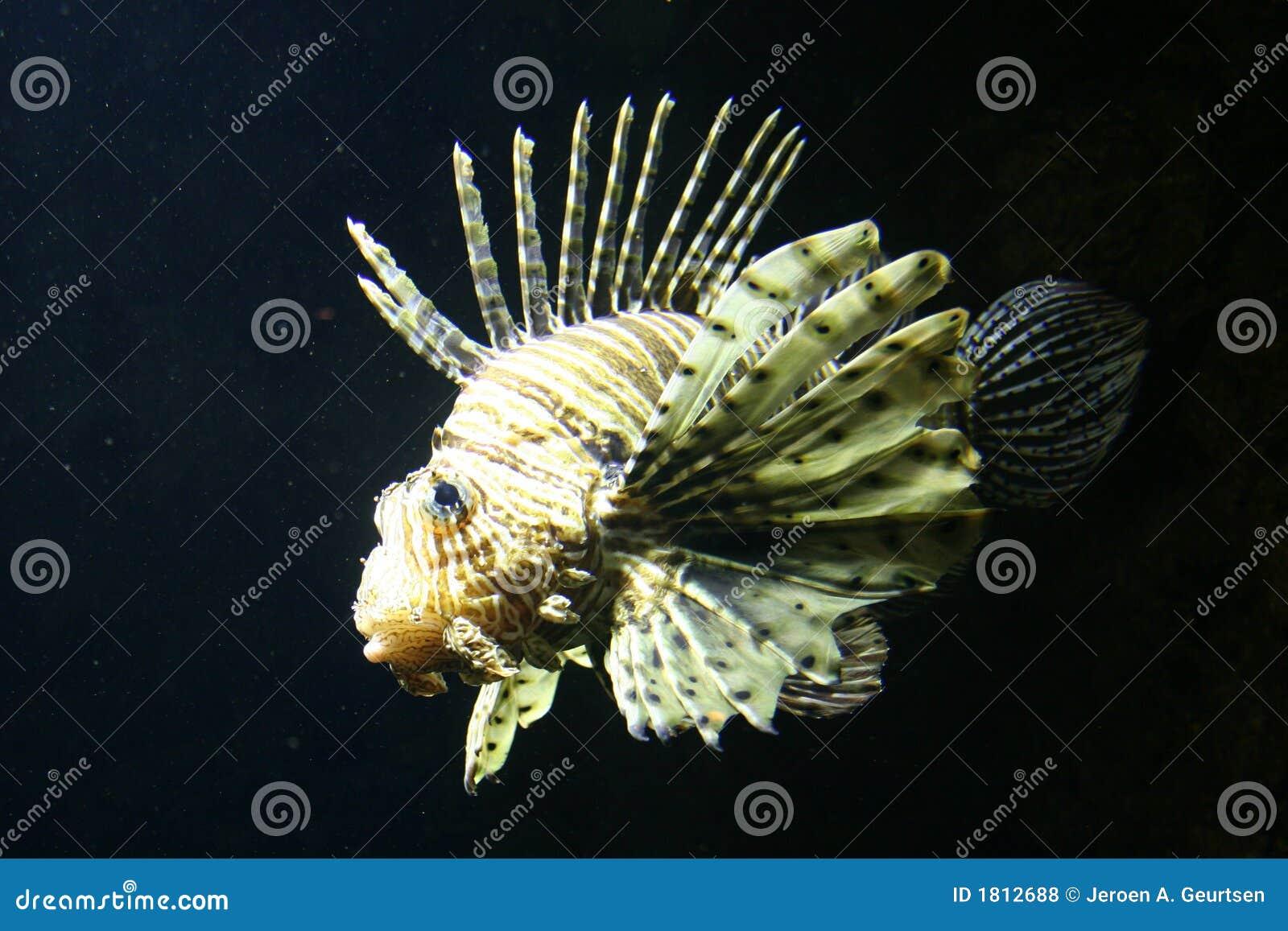 Fische Und Skorpion Passt Das