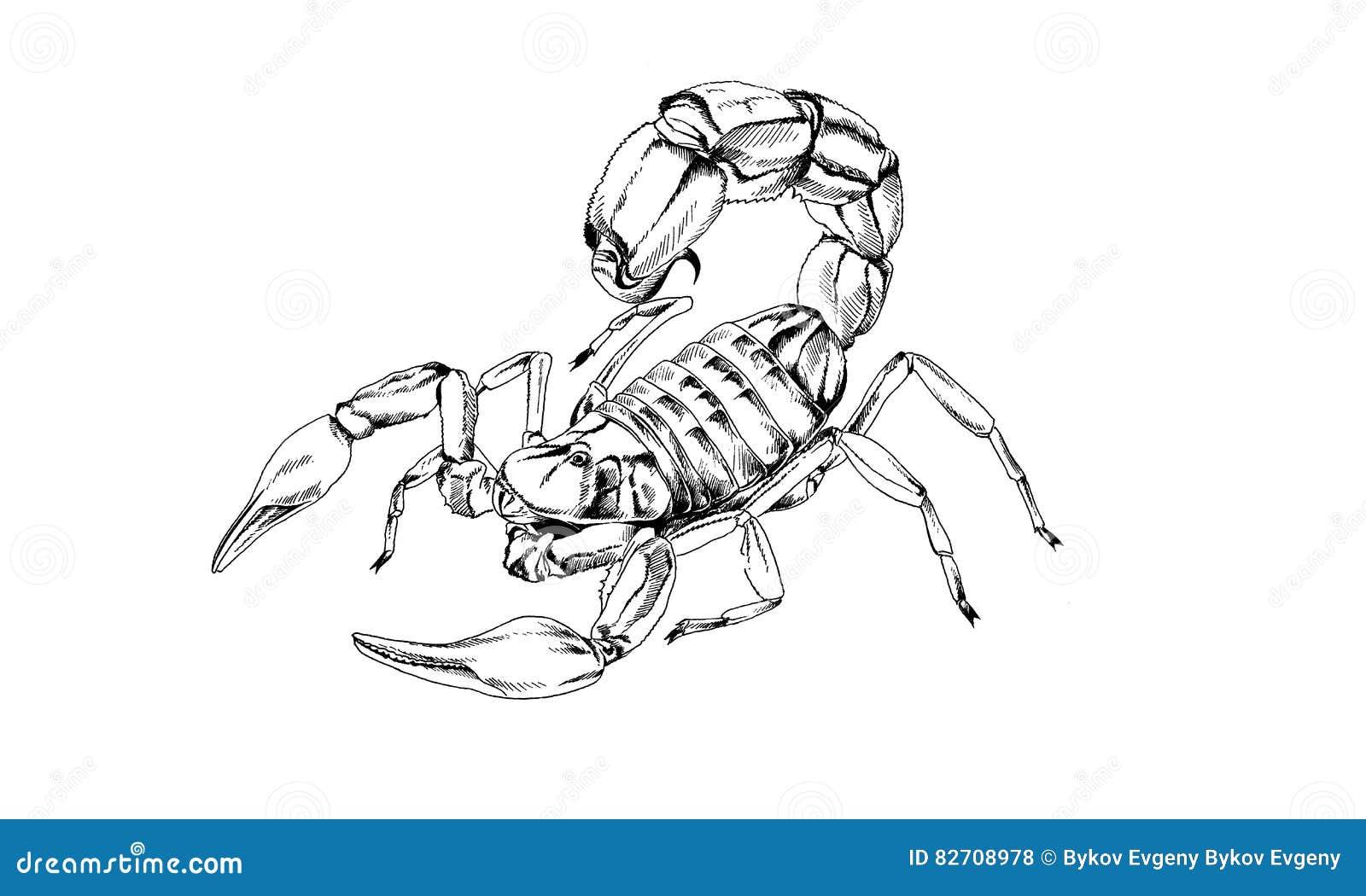 Skorpion Wird In Tintentätowierung Gezeichnet Vektor Abbildung