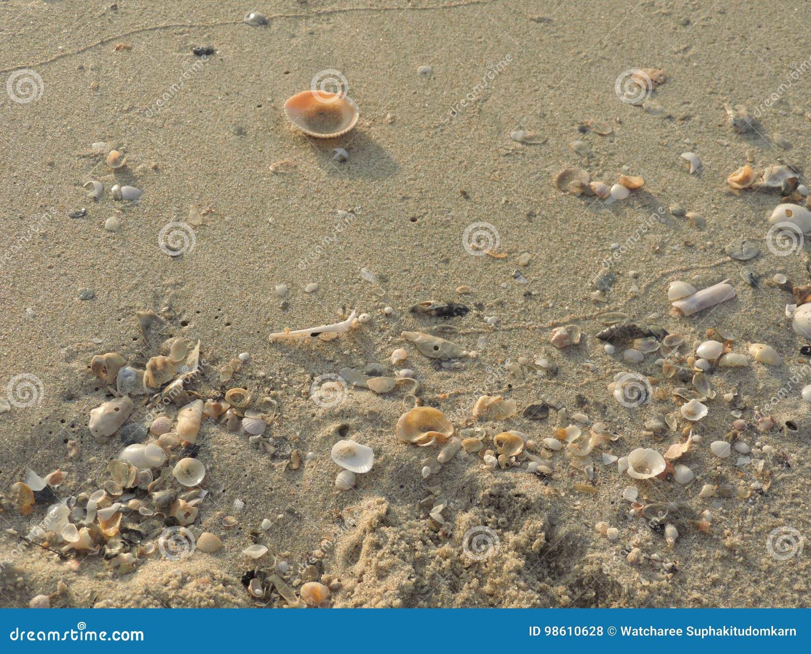 Skorupy Na piasku