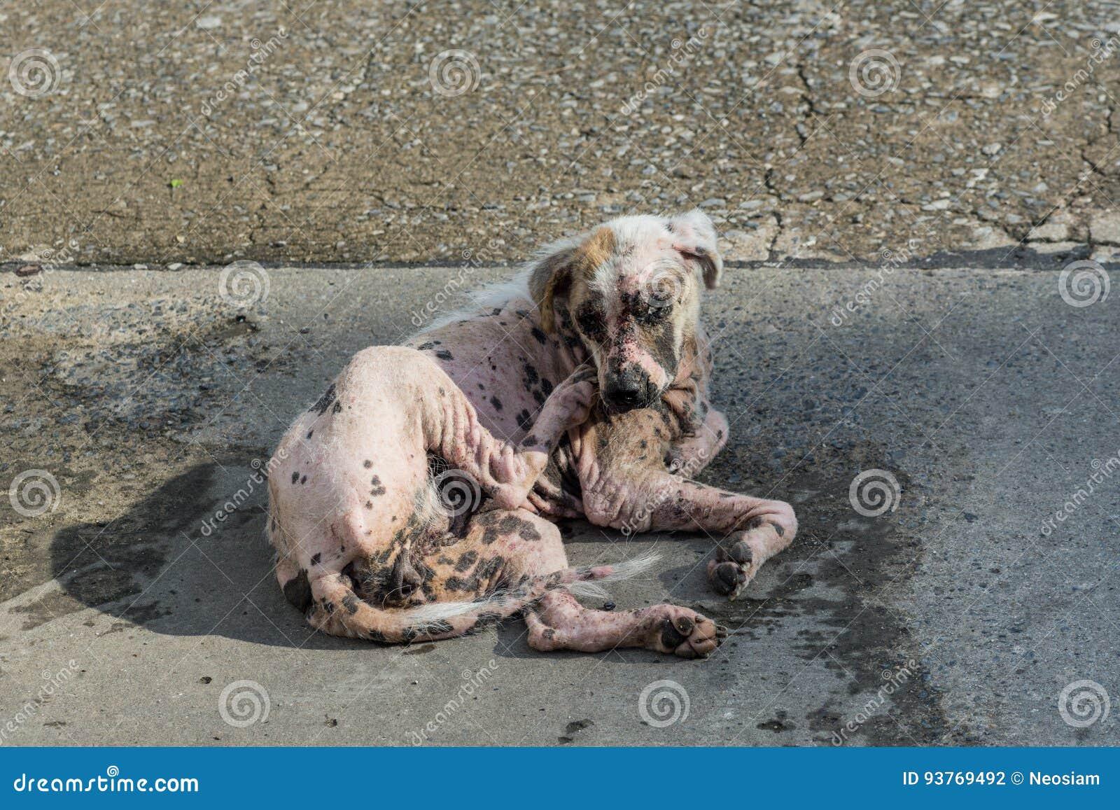 Skrapa för päls för skabbhund vitt