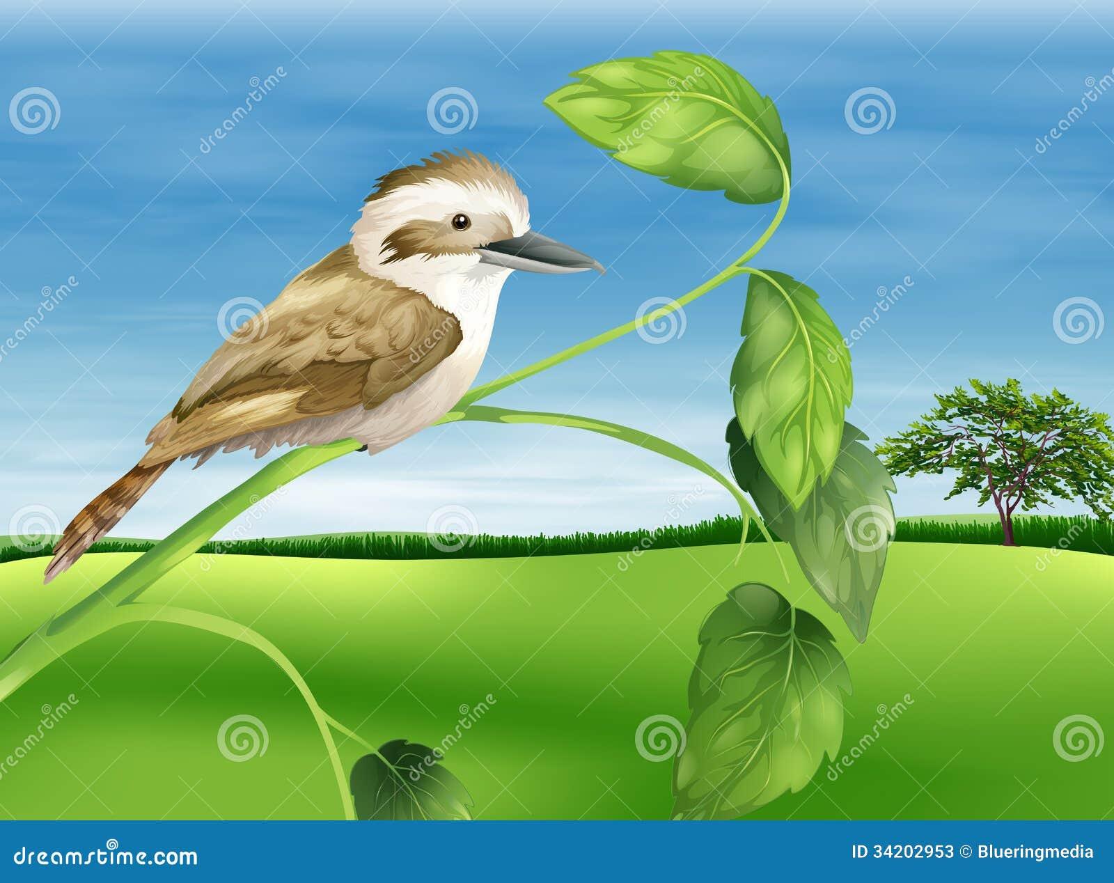 Skrattfågel