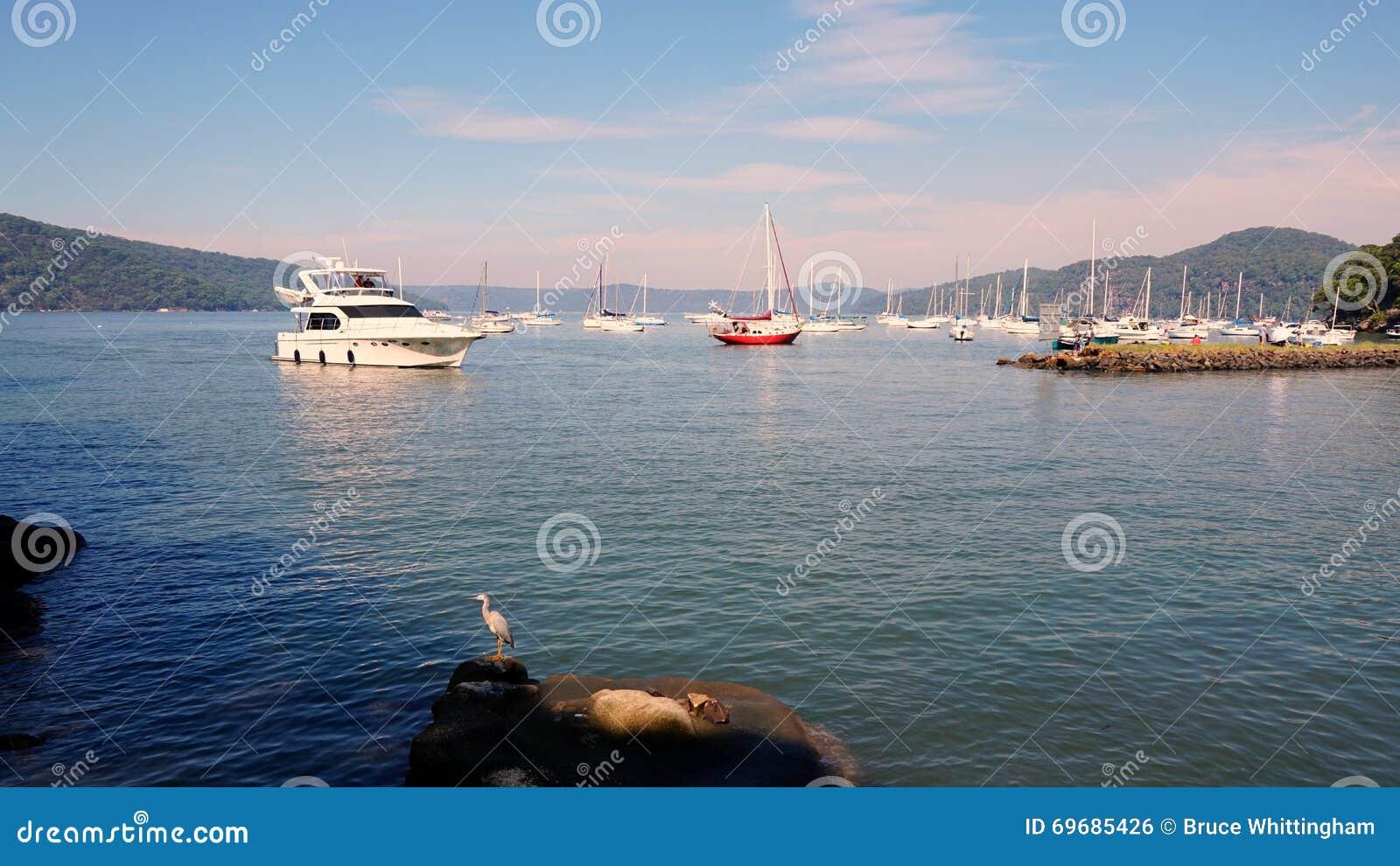 Skrivande in marina för kryssningfartyg