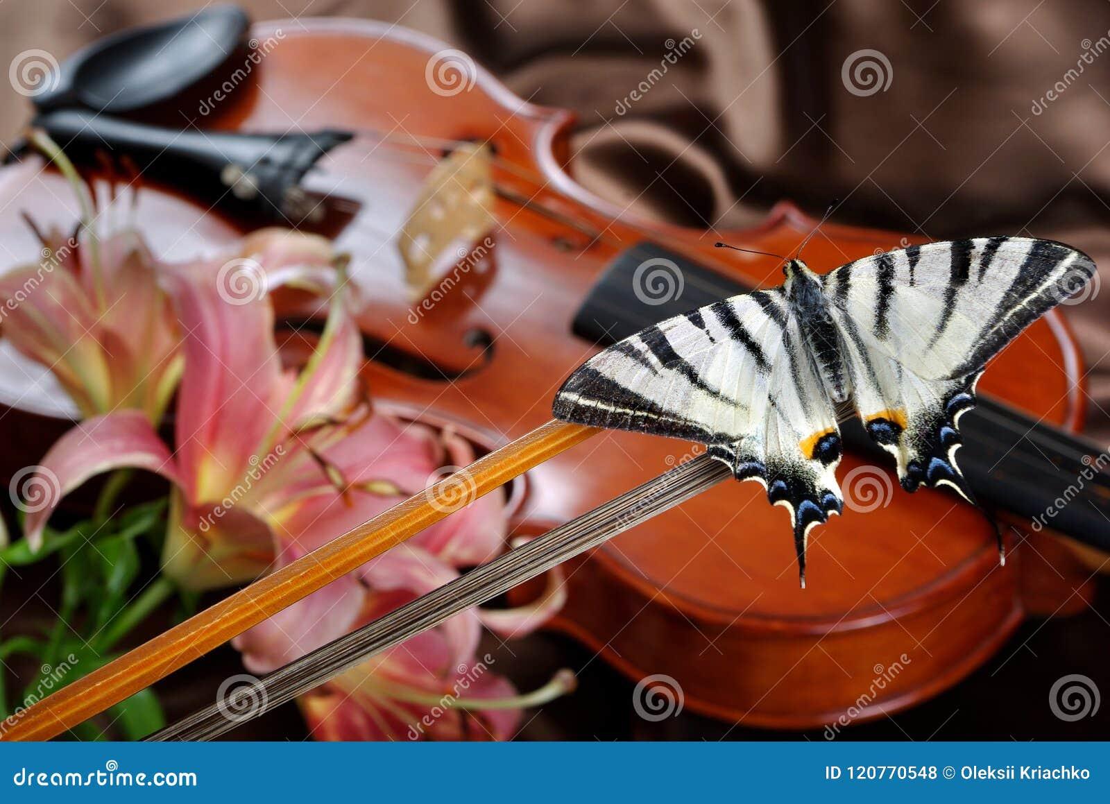Skrzypce i motyl motyl na łęku rzadki swallowtail Żagla swallowtail
