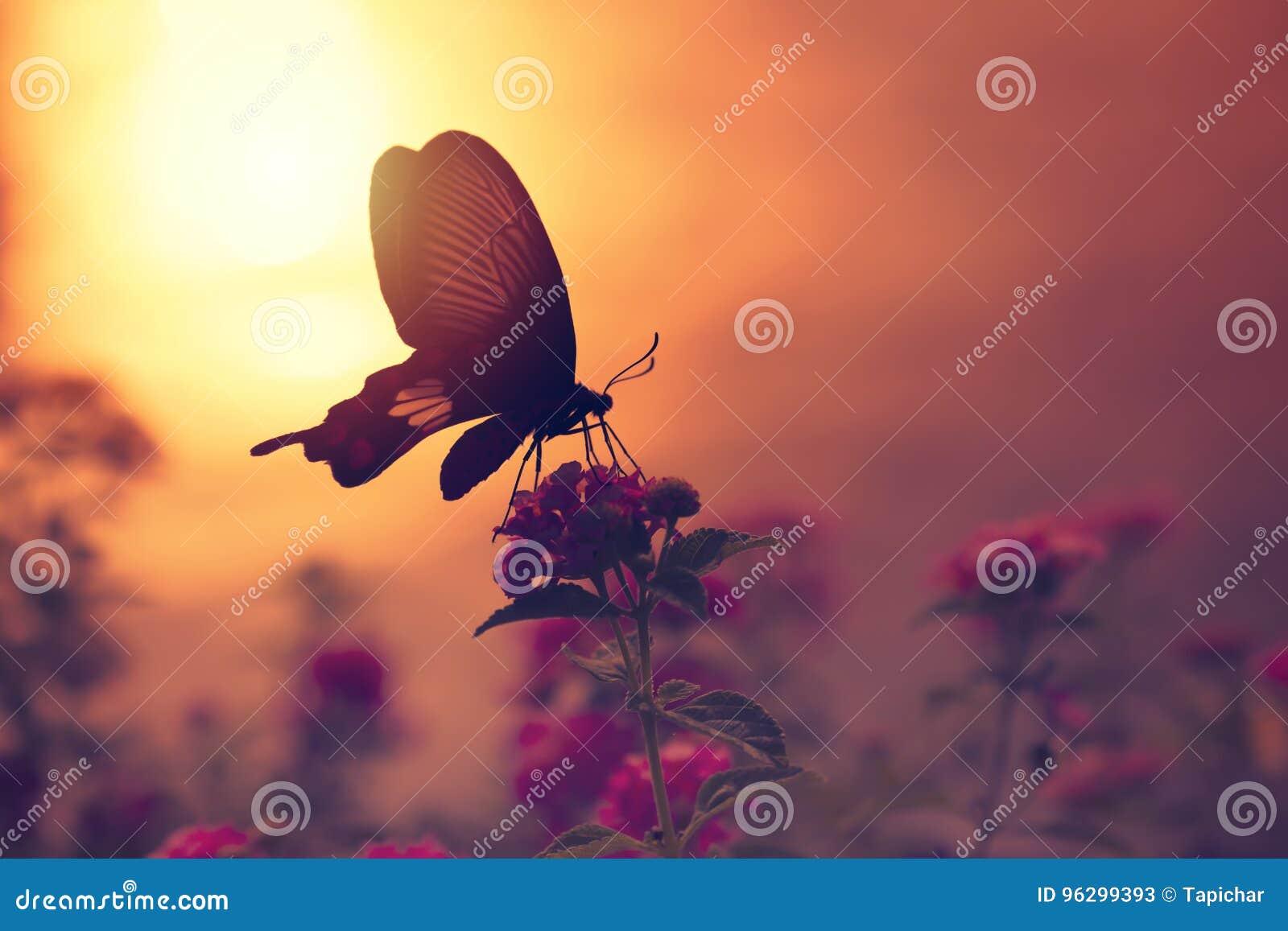 Skugga av fjärilen på blommor med solljusreflexion från wat