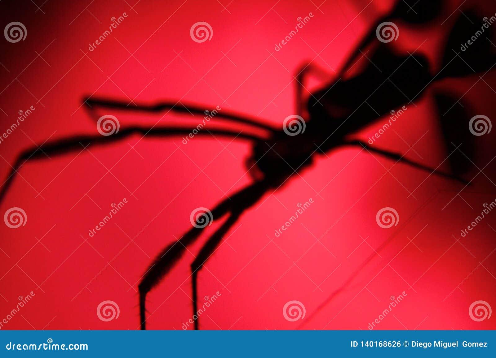 Skuggor av skrämmer den stora spindeln