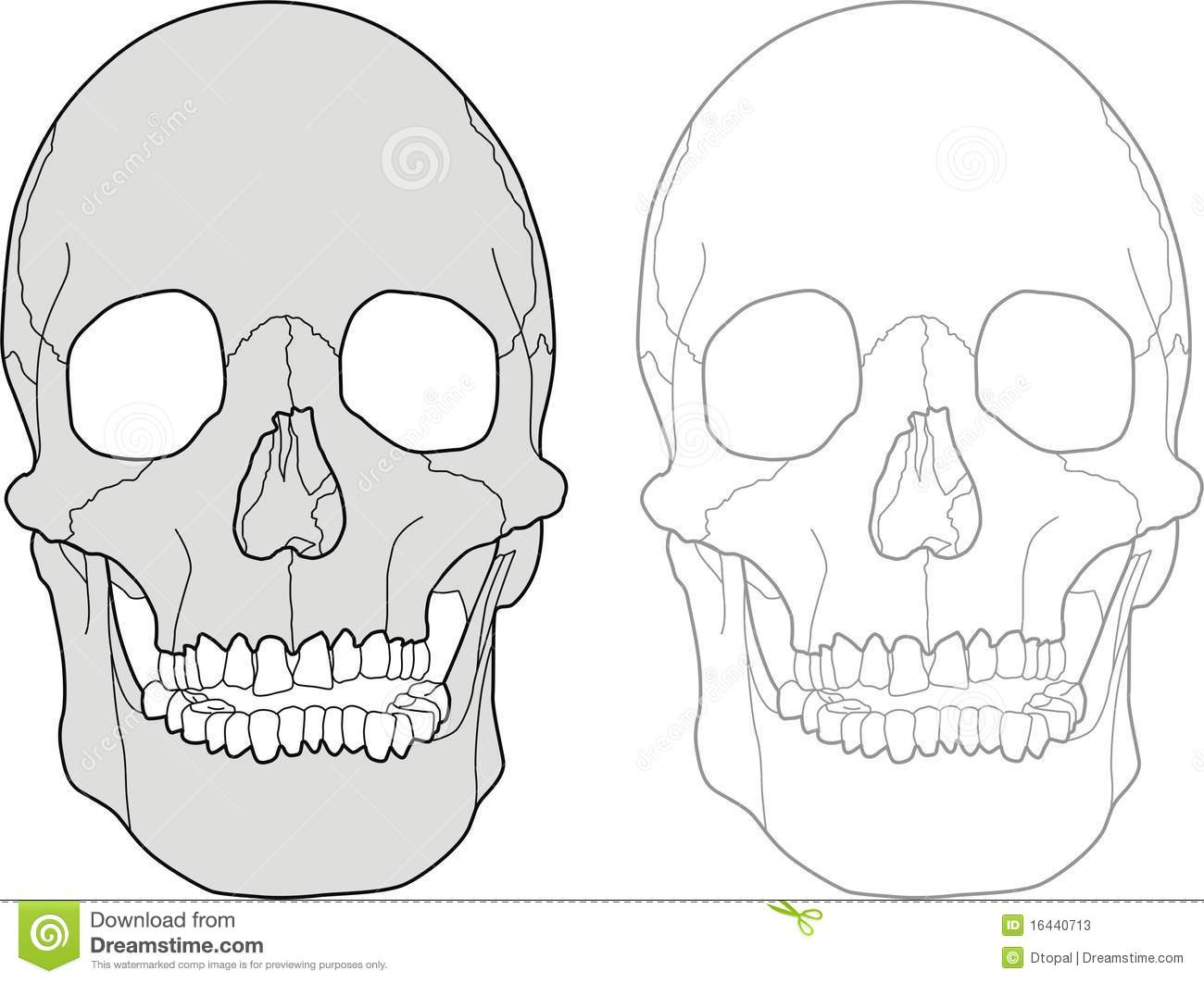 Skull Stock Photos - Image: 16440713 |Skull Outline Drawings
