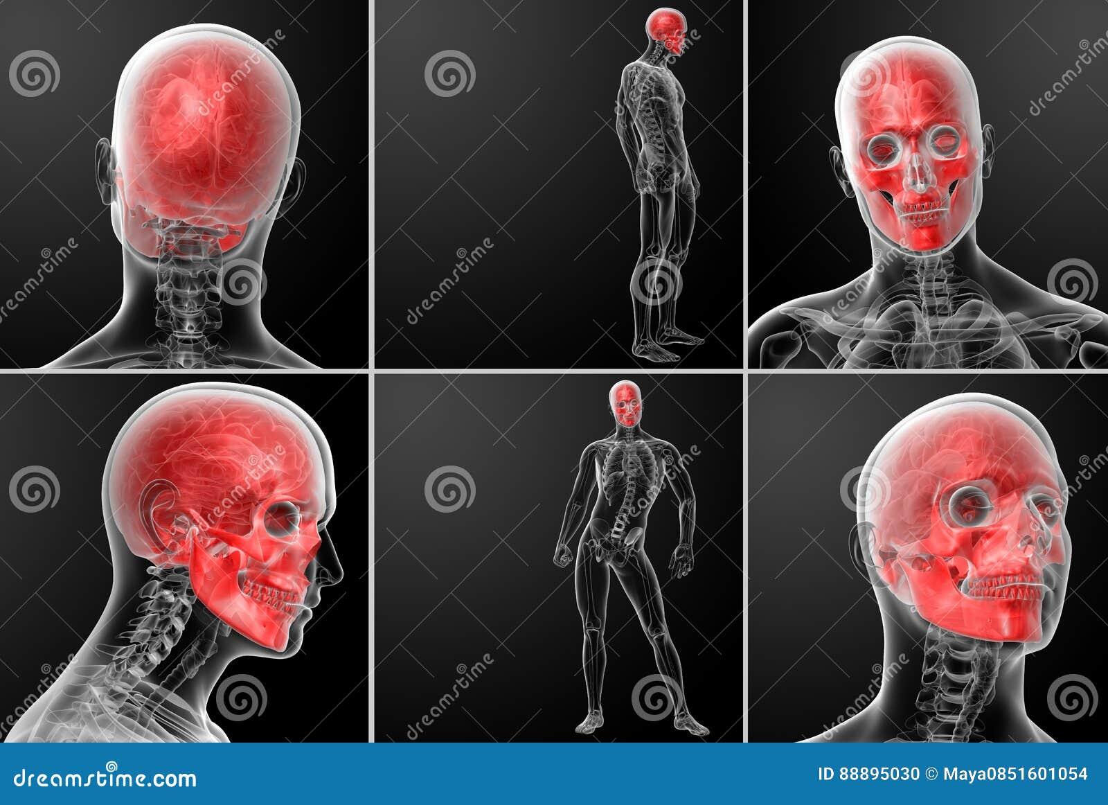 Skull anatomy stock illustration  Illustration of dead - 88895030