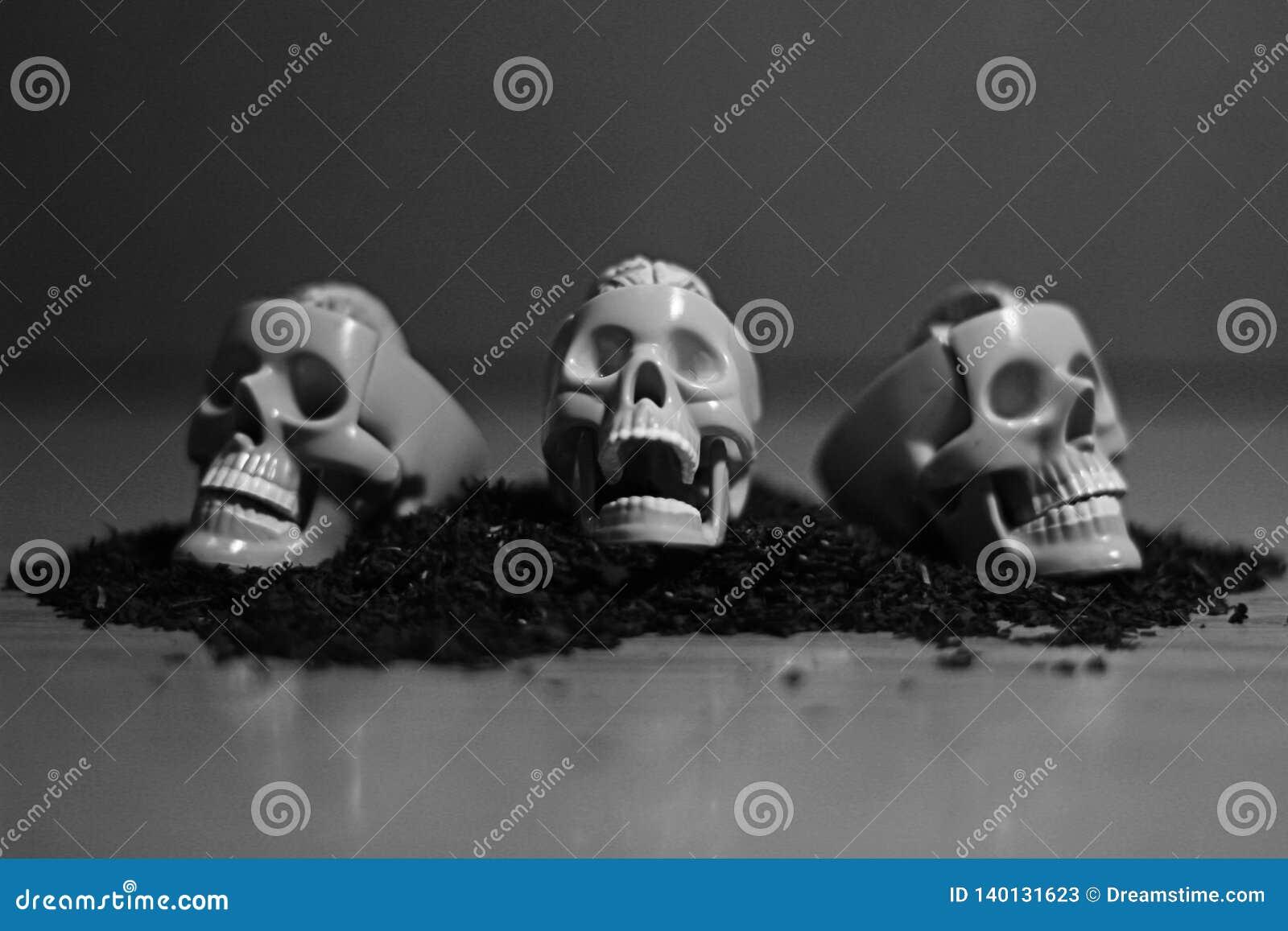 Skull art photo for all