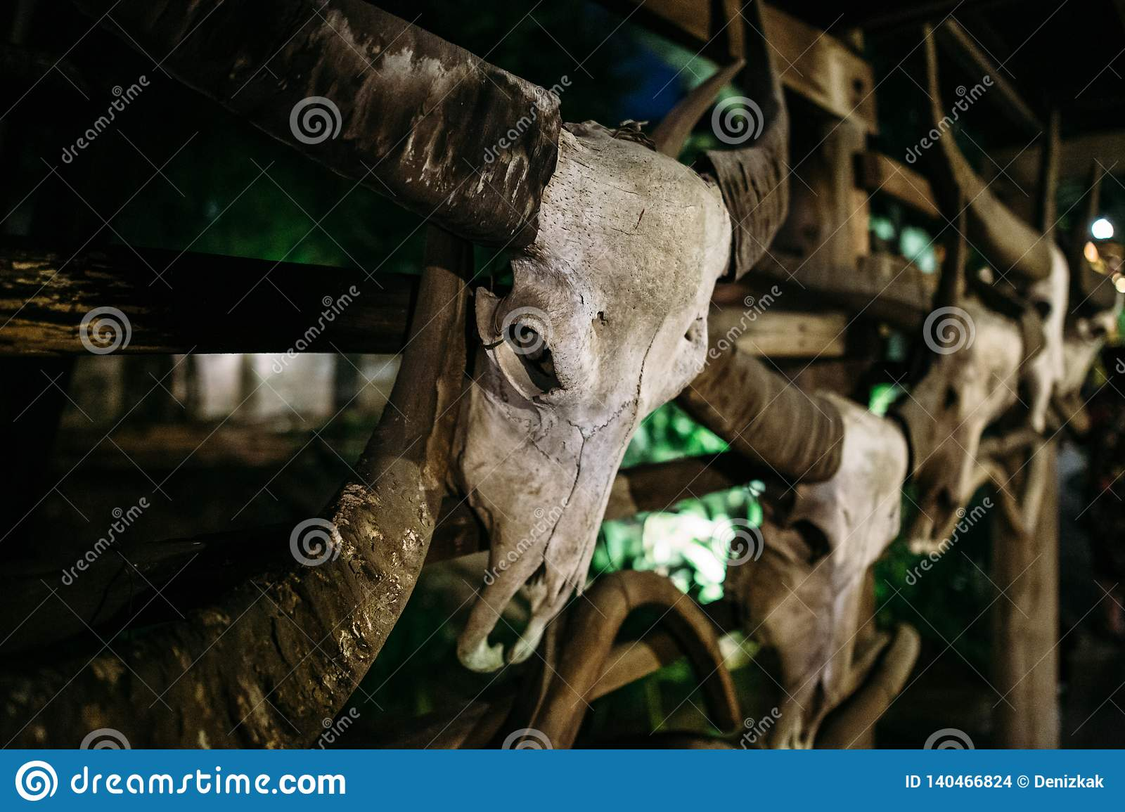 The skull of a bull hangs on the wall. Very old and worn from time to time