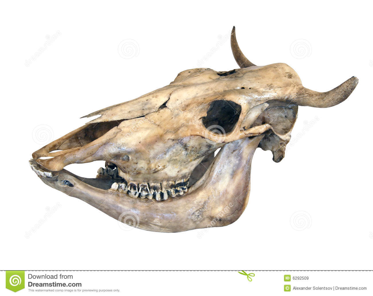 Download Skull of a cow stock image. Image of doom, background ...