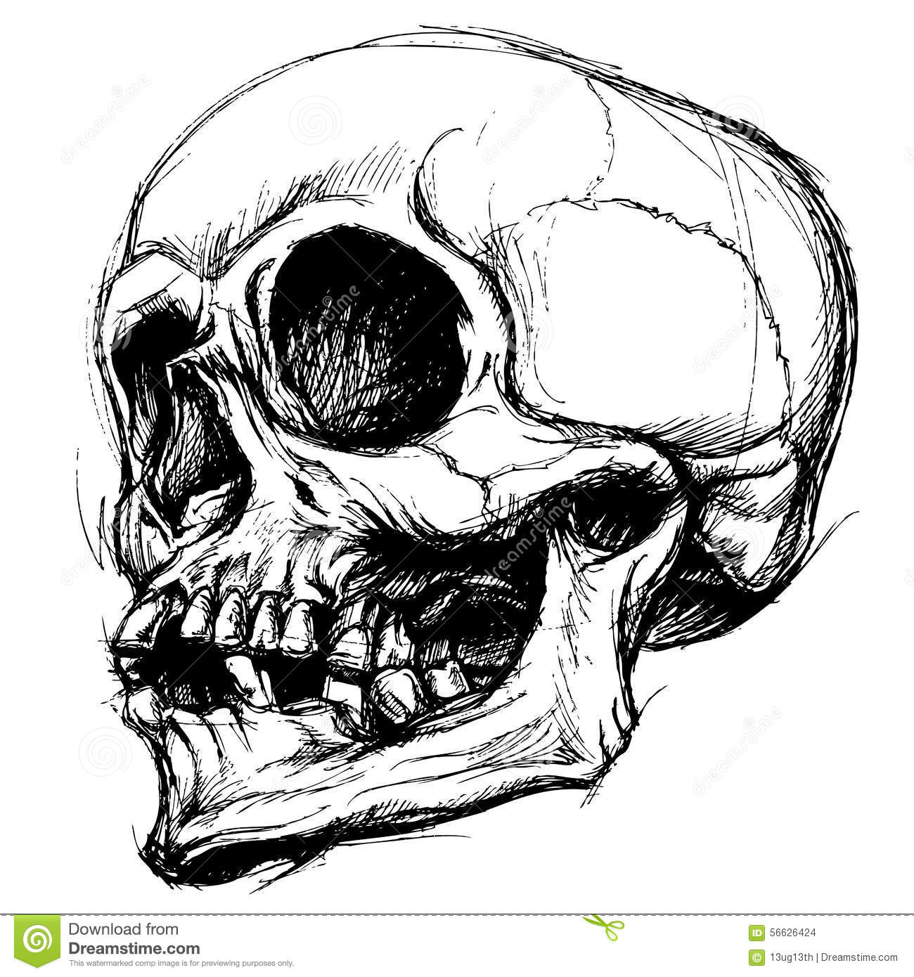Line Art Work : Skull drawing line work vector stock illustration