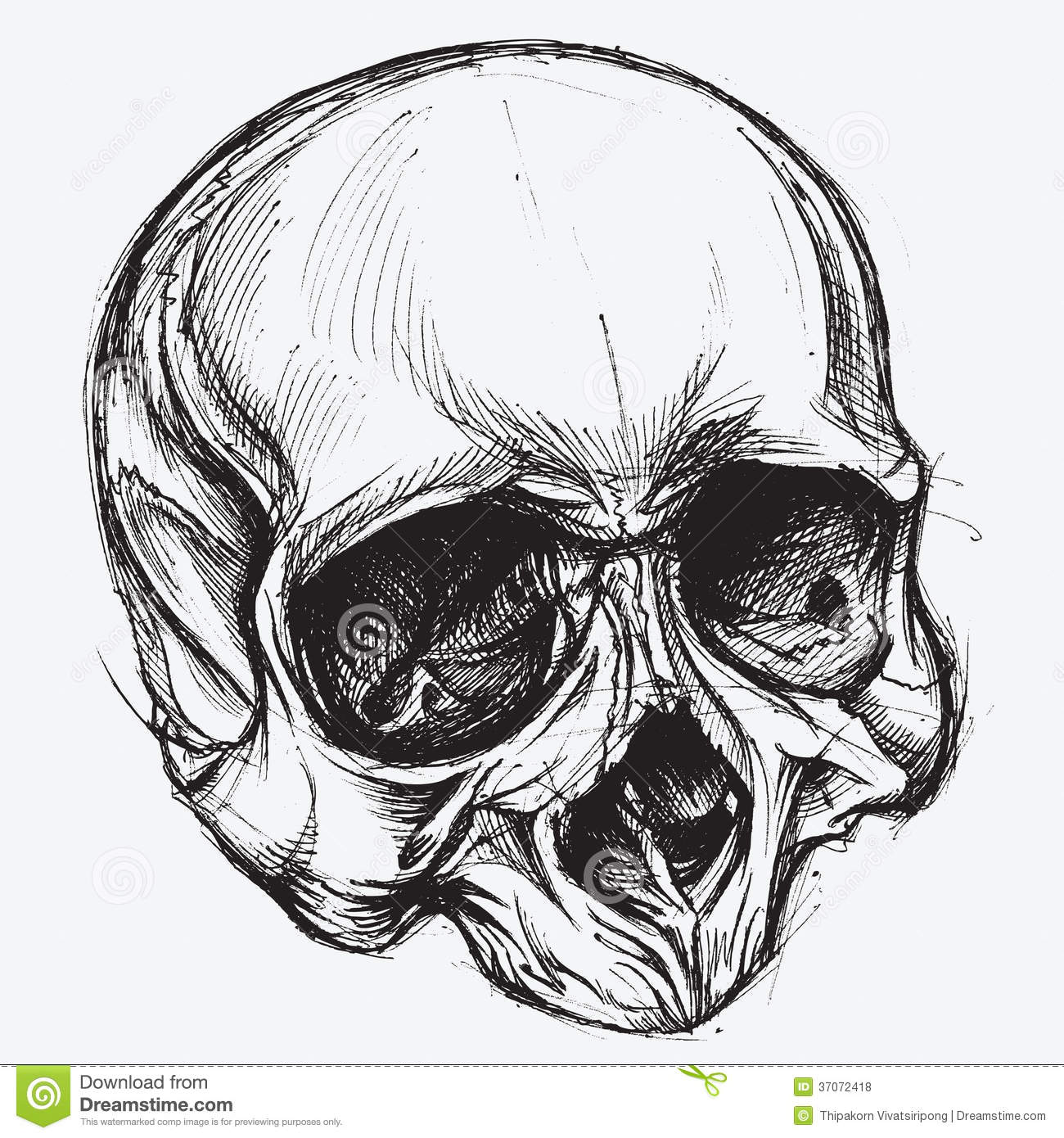 X Ray Line Drawing : Skull drawing stock vector illustration of background