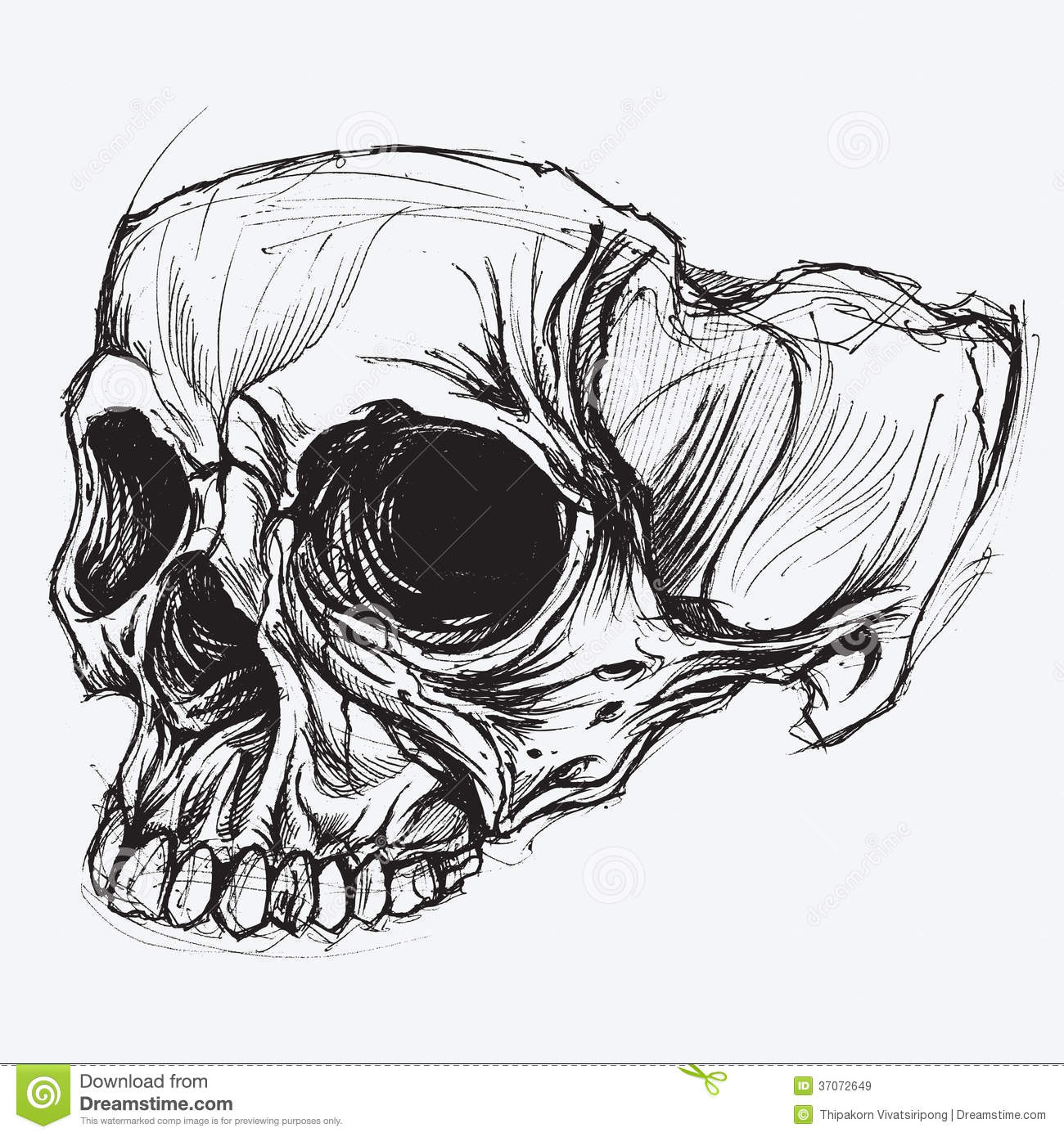 Drawing Lines Using Svg : Skull drawing royalty free stock images image