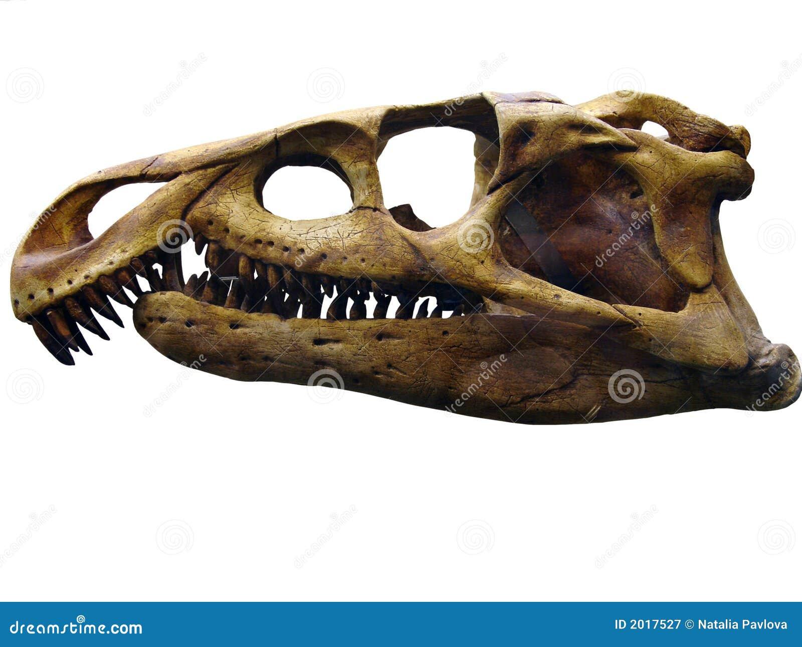 Reptilian skull