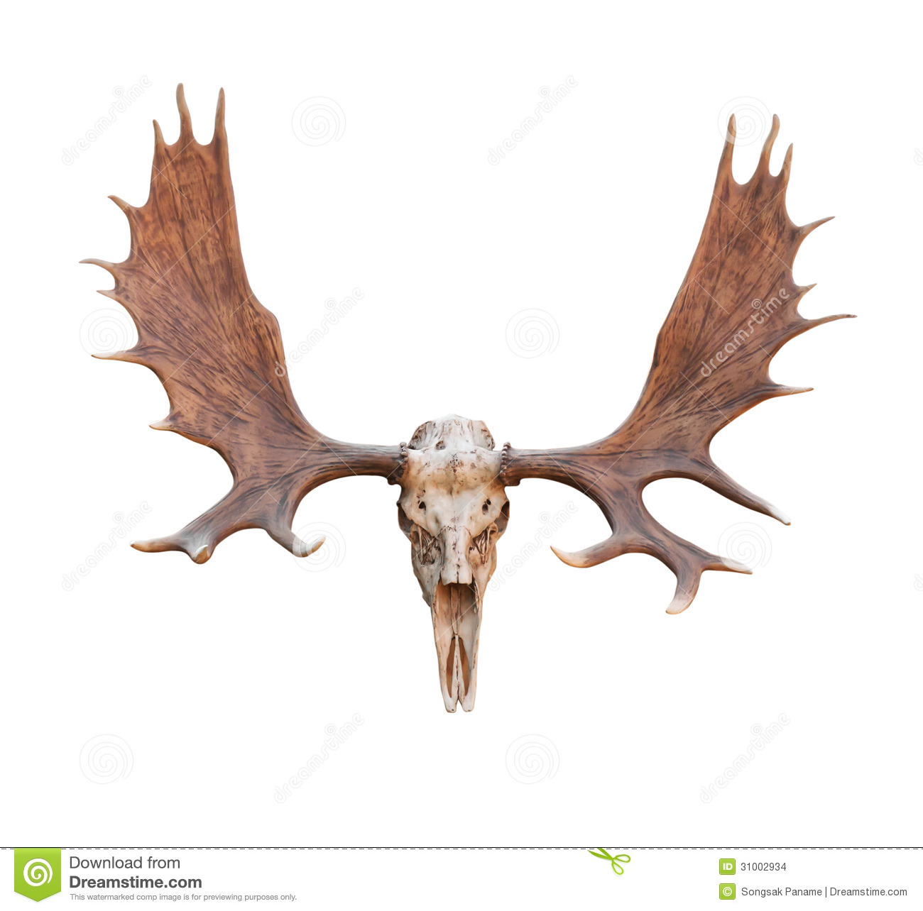 skull moose stock images image 31002934