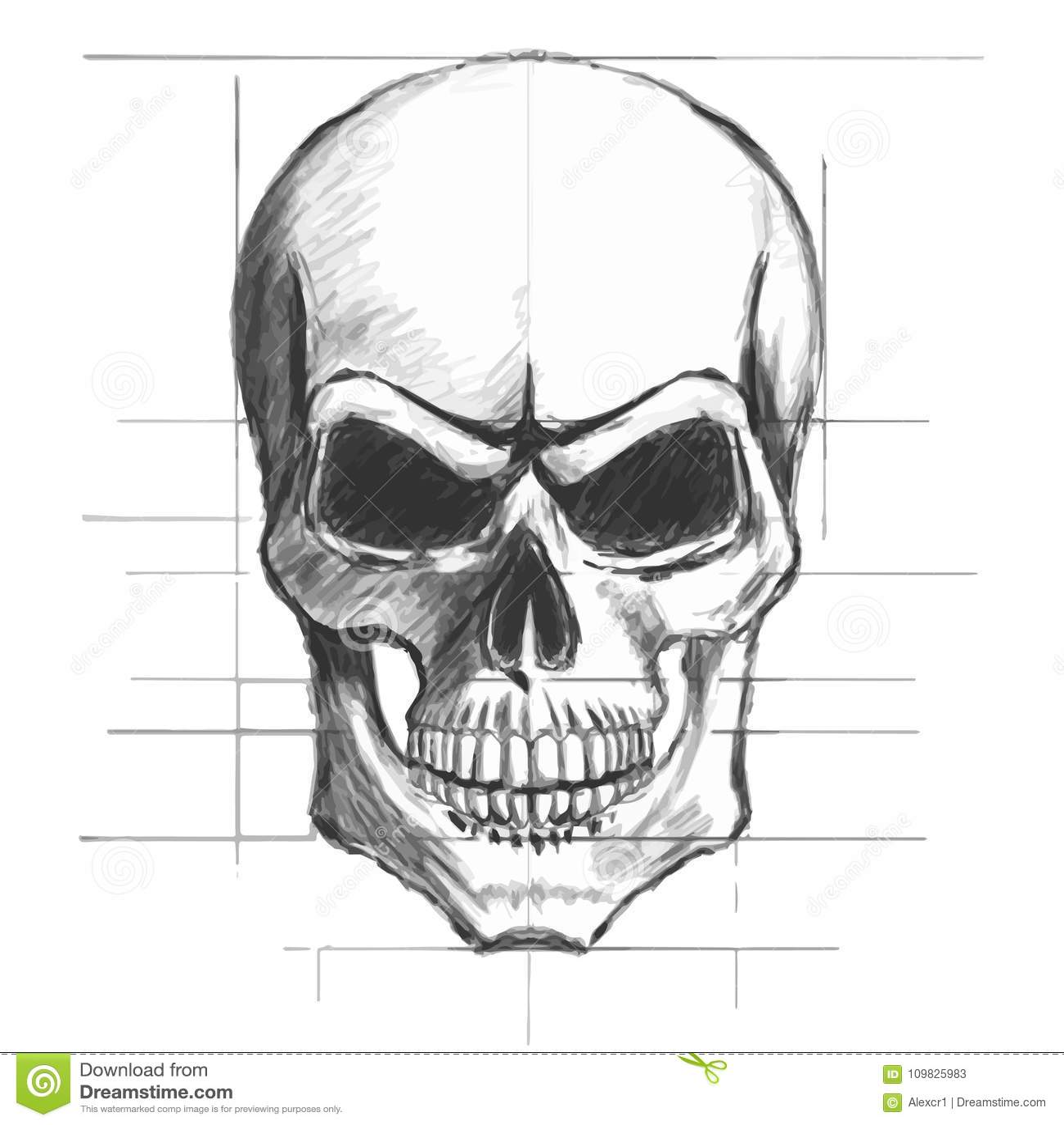 Skull pencil sketch vector stock vector illustration of