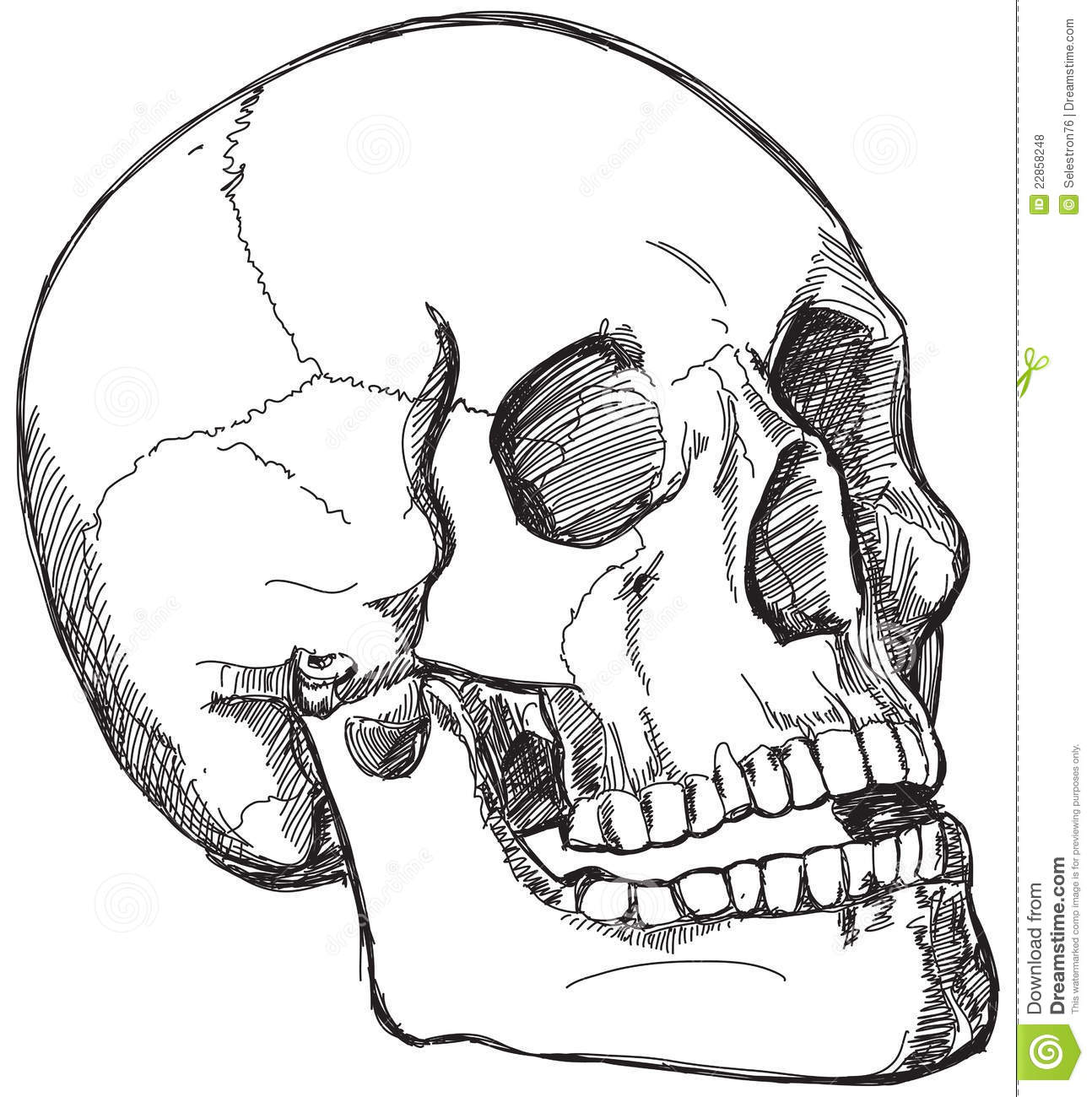 Skull Sketch Royalty Free Stock Photos Image 22858248