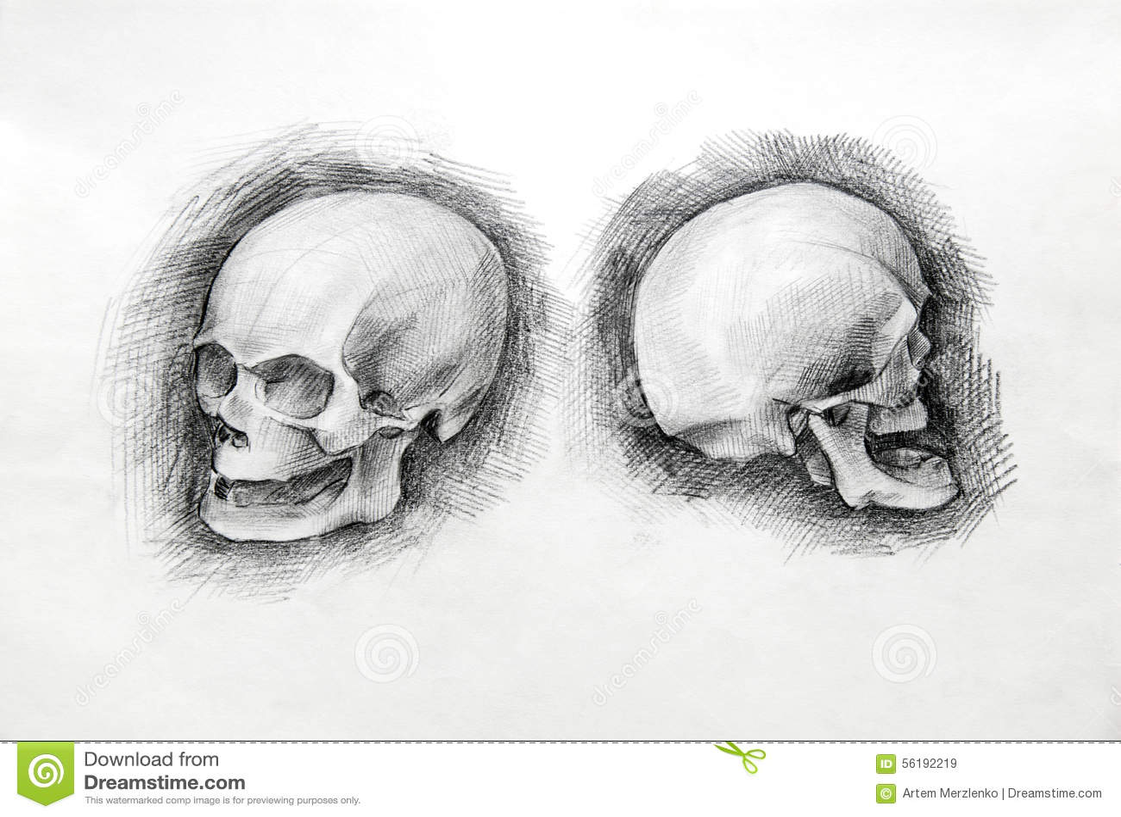 Skull Study Drawing. Pencil On Paper. Stock Illustration ...