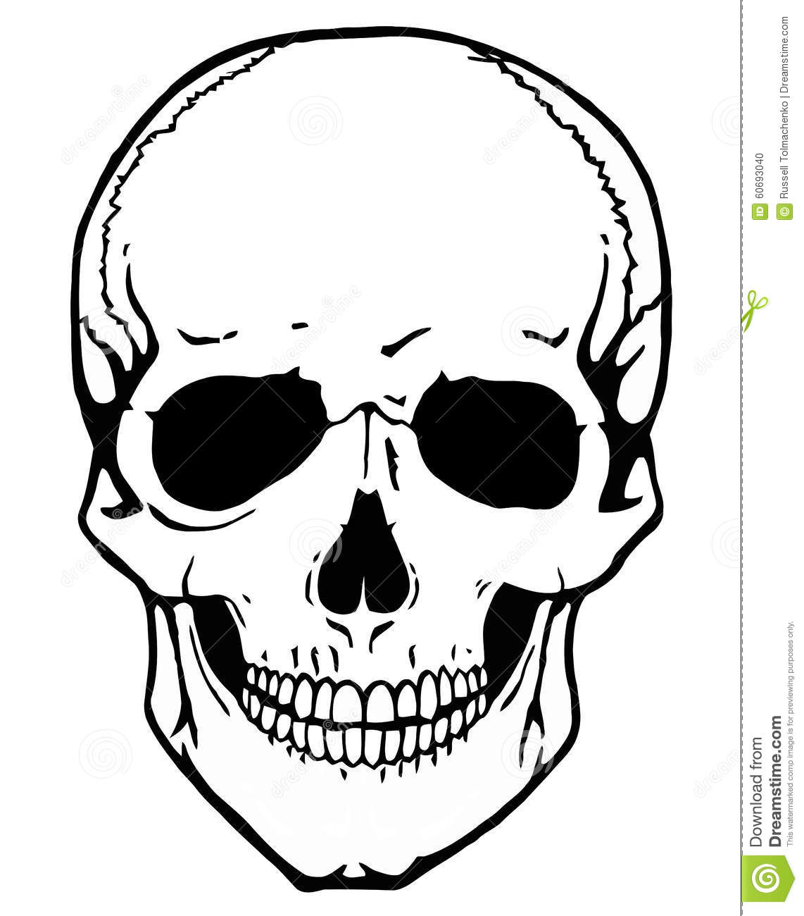 Stock Photo: Skull vector. Image: 60693040