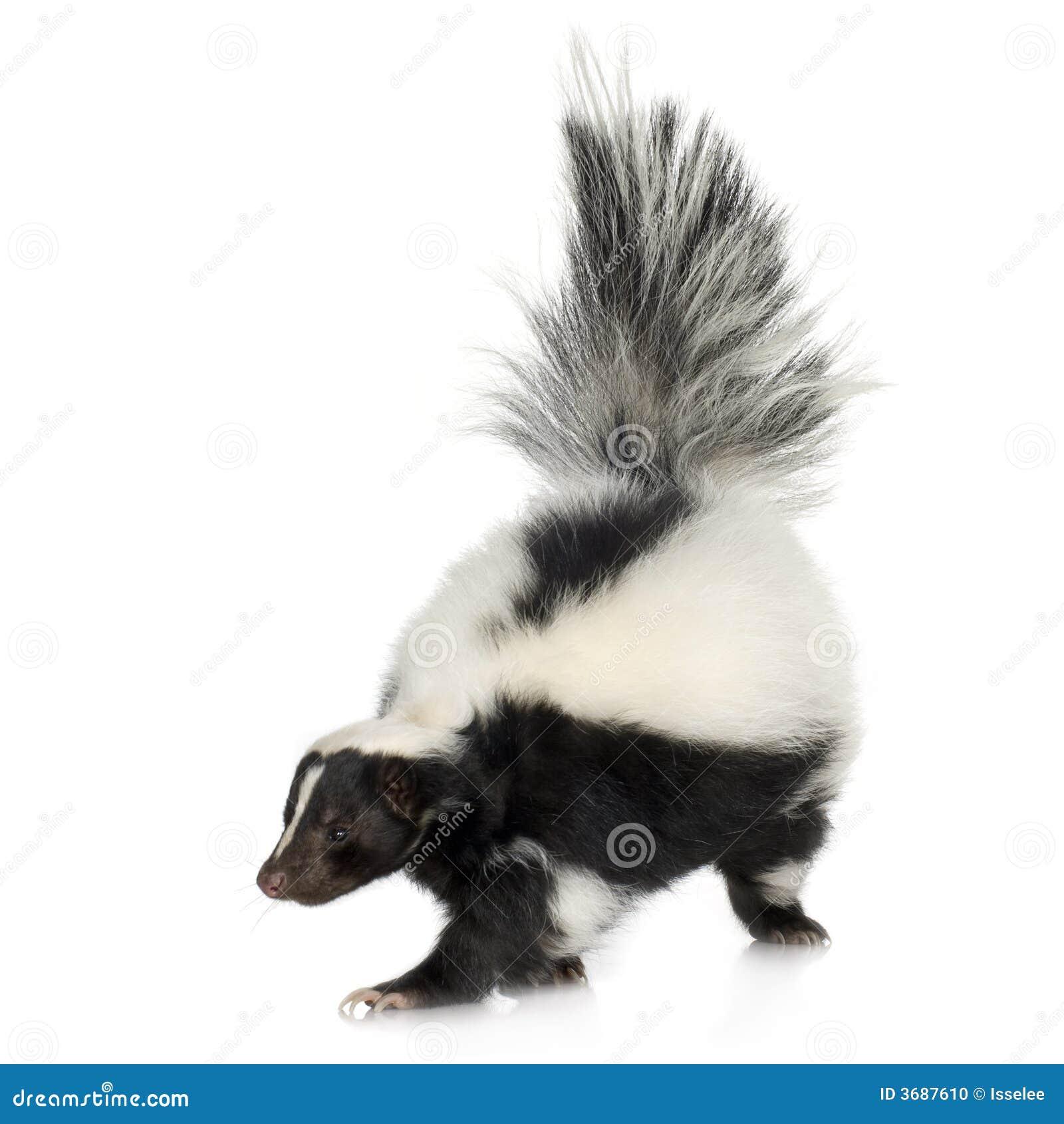 Skunks mephitis nosi