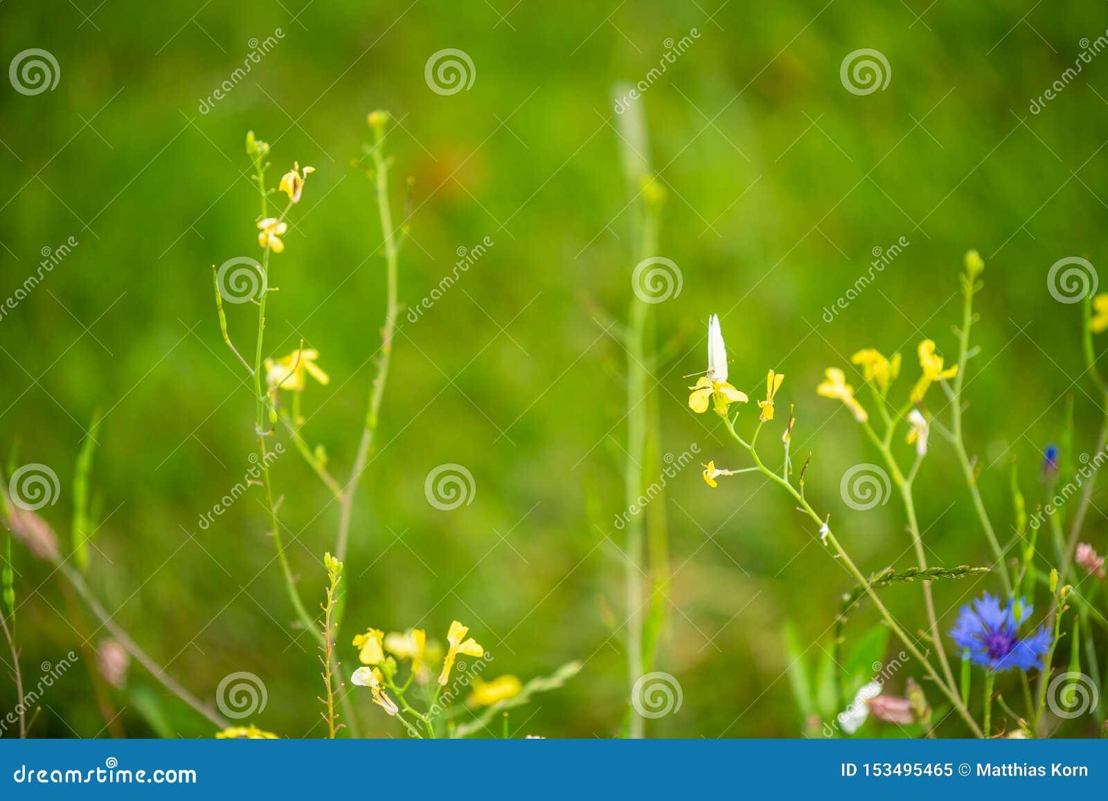 Skupia się na kwiatach i roślinach z pięknymi kolorami