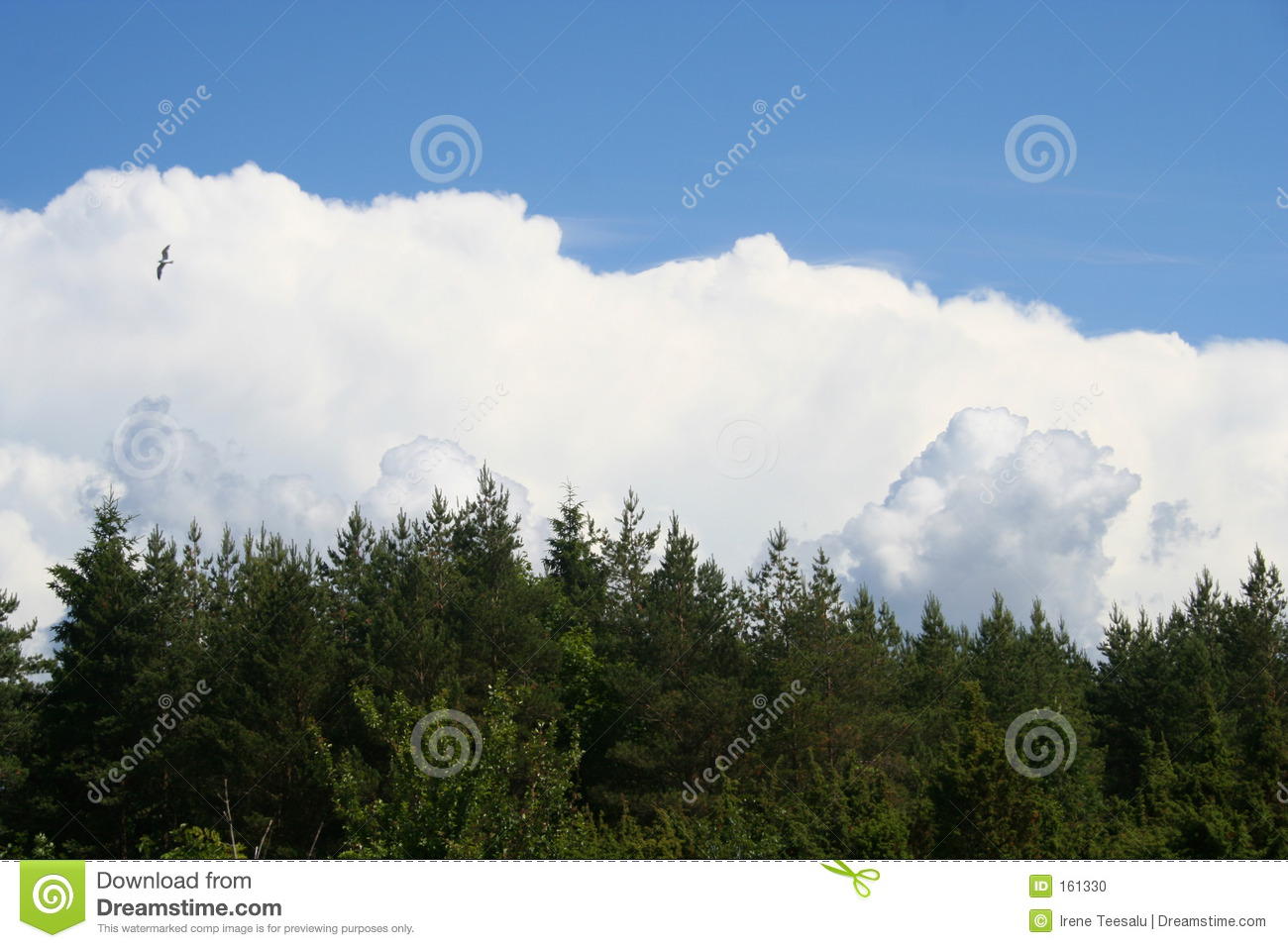 Sky, clouds, forest