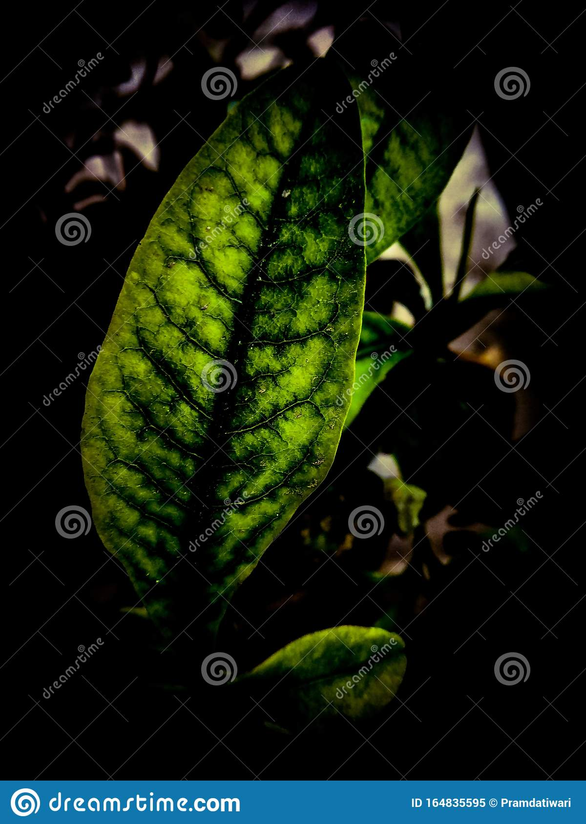 Sky Flower Leaf In Dark Background Faded For Wallpaper Stock Image Image Of Clipart Background 164835595