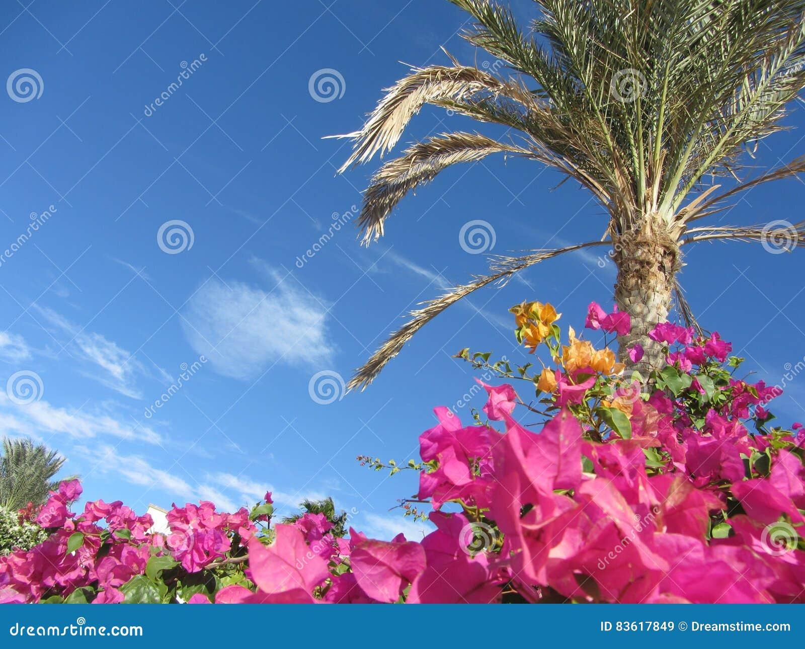 Sky, flowers and Palma