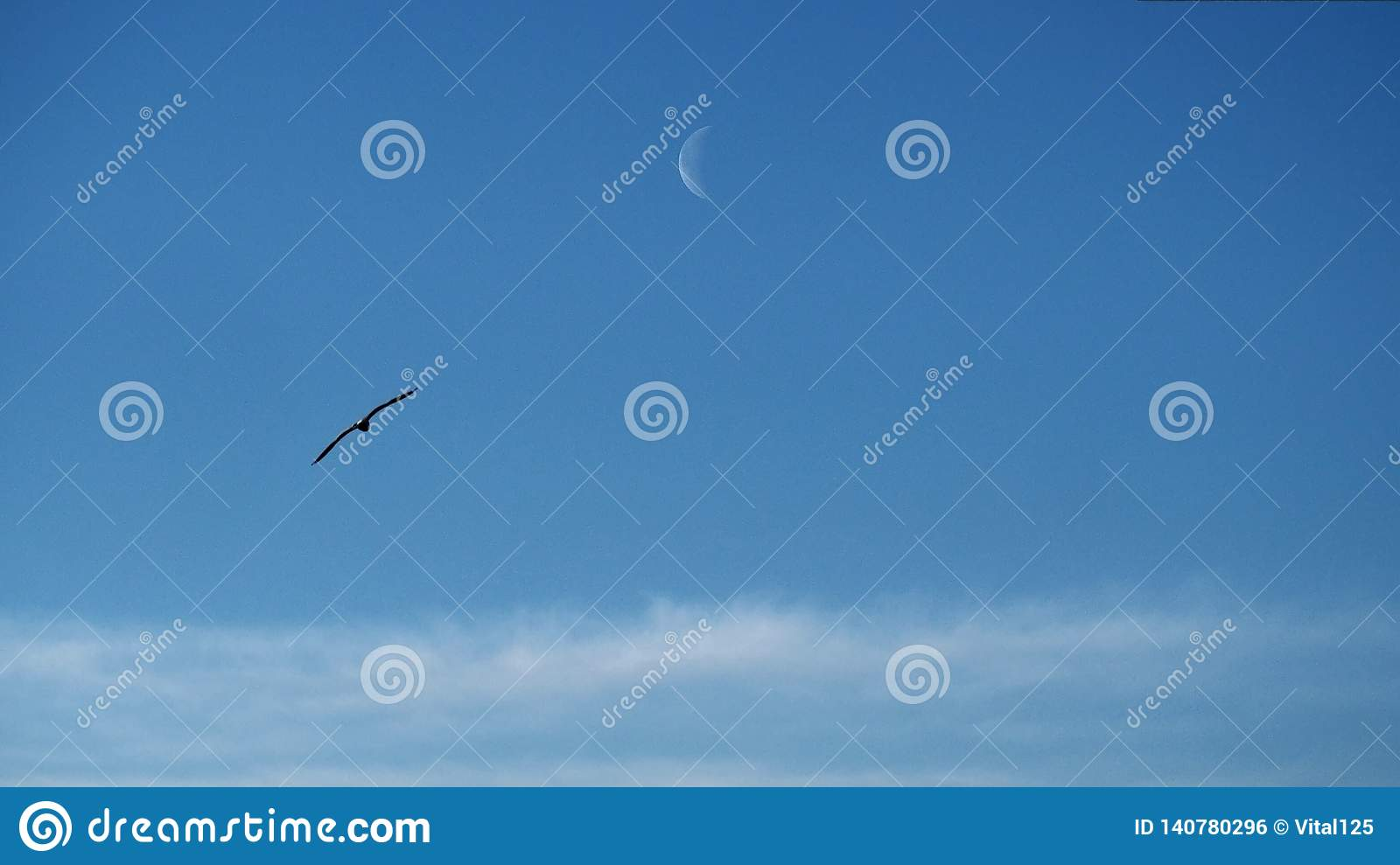 Moon clouds and birds observing on blue ksy