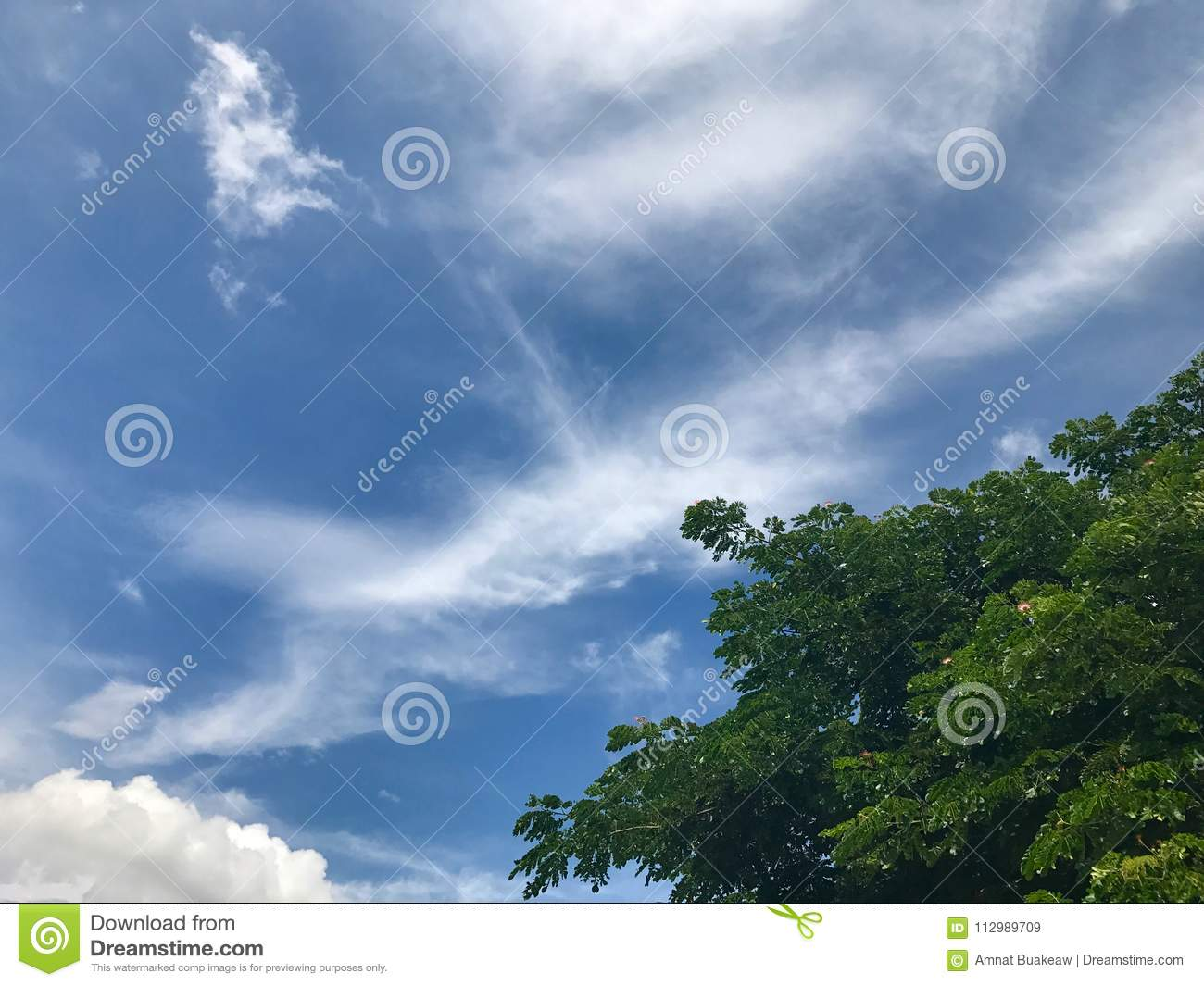 Sky and Tree nature with Bottom right corner