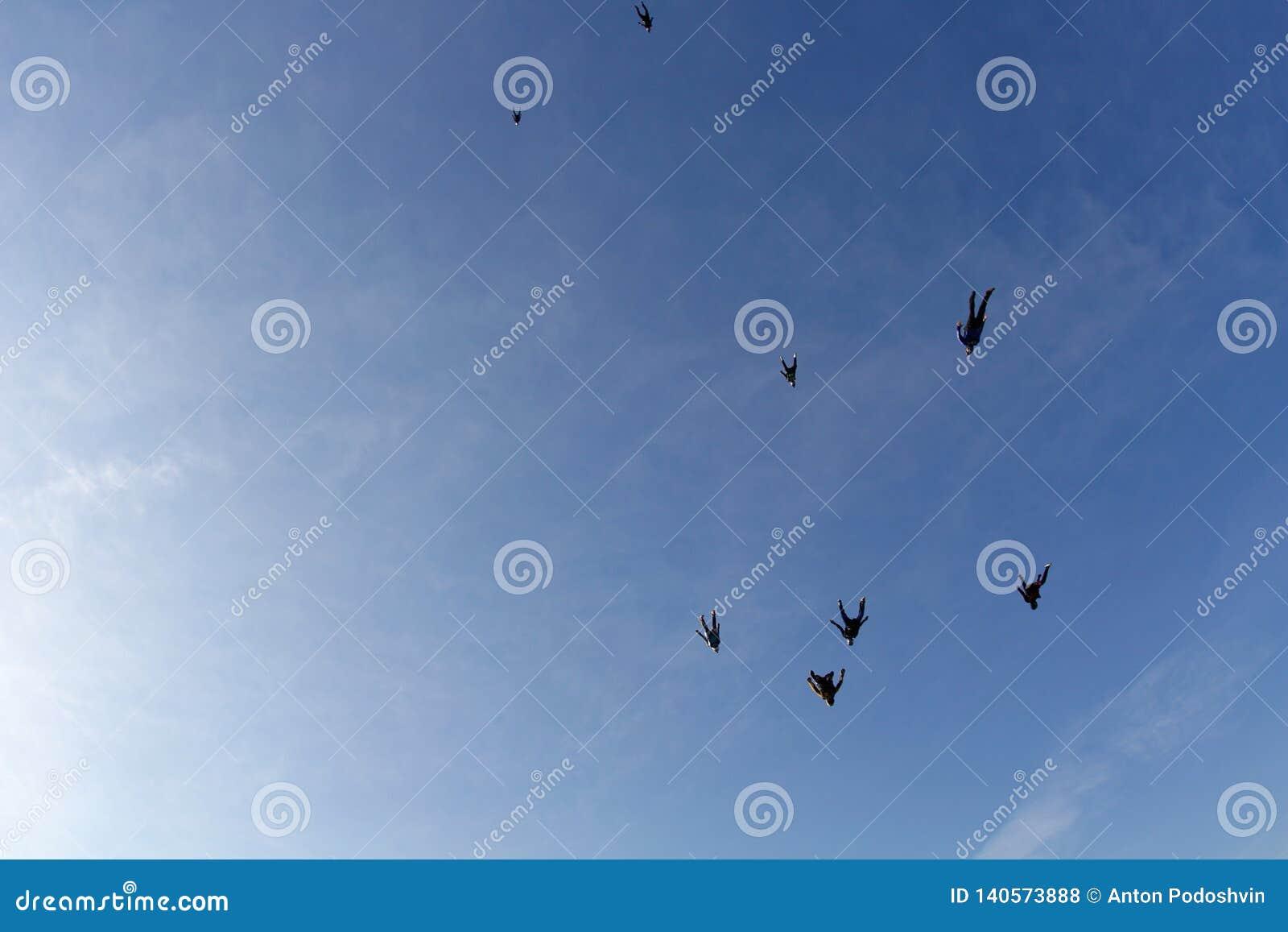 Skydiving Los Skydivers están volando en el cielo como una multitud de pájaros