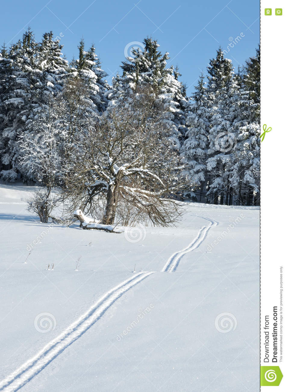 Skying Cross Country