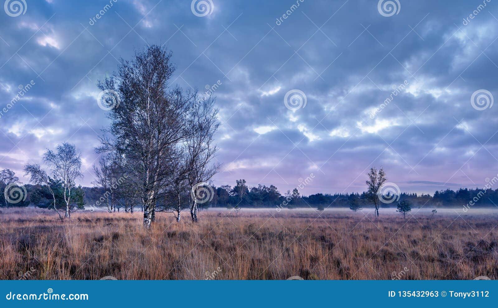 Skymningplats på ett stillsamt hed-land, Nederländerna