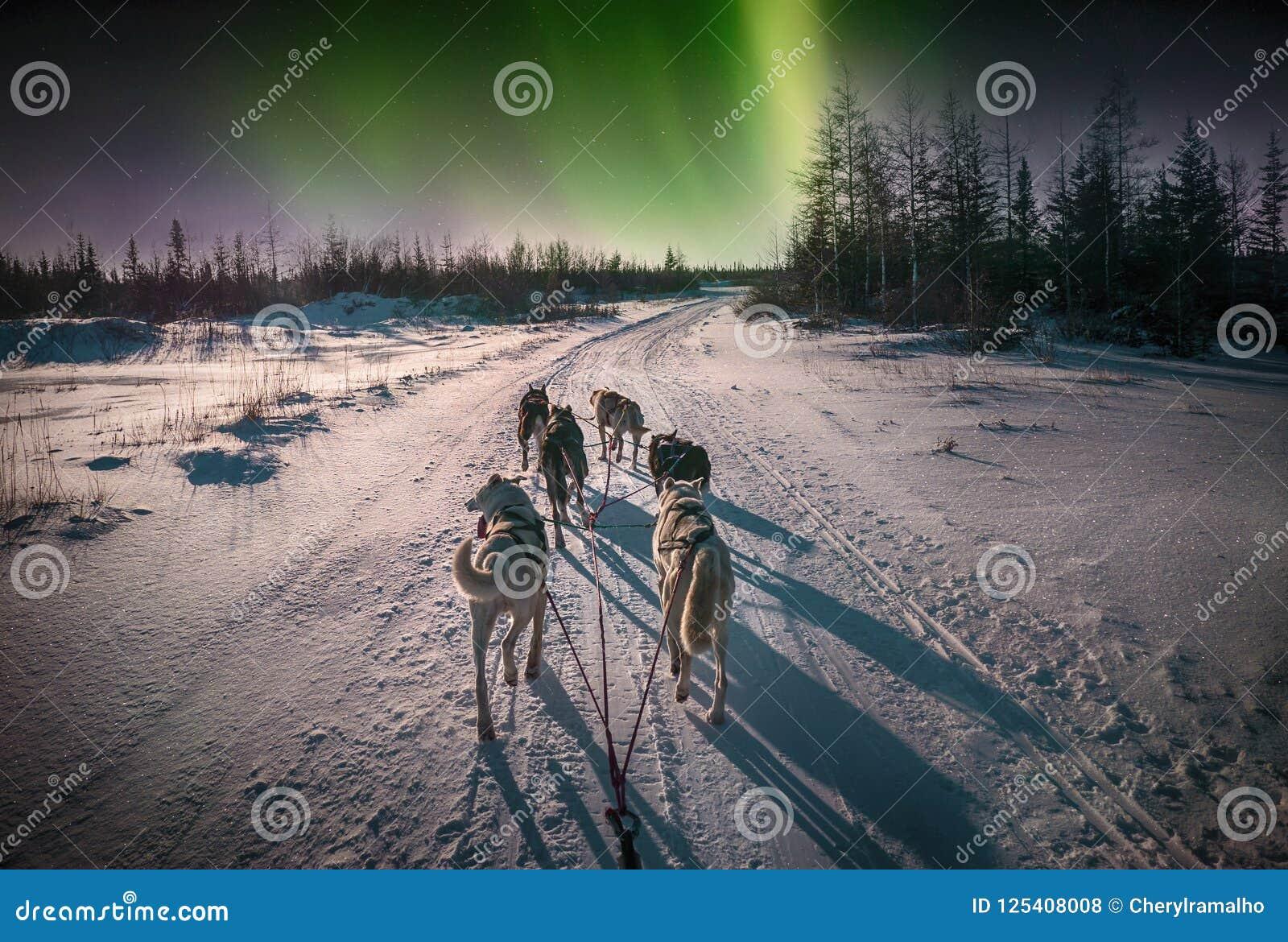 Slädehundkapplöpning och nordliga ljus