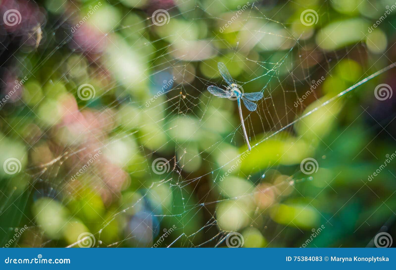 Sländan i förtjänar av en spindel