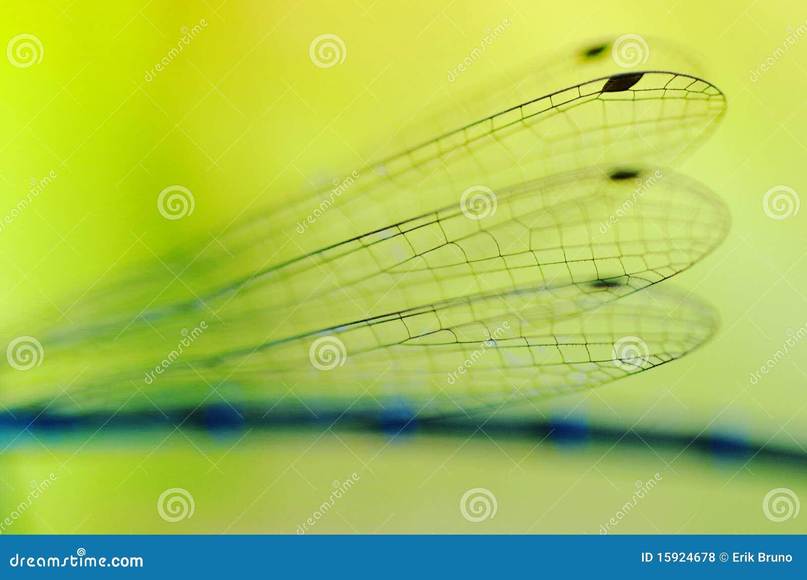 Sländavingar